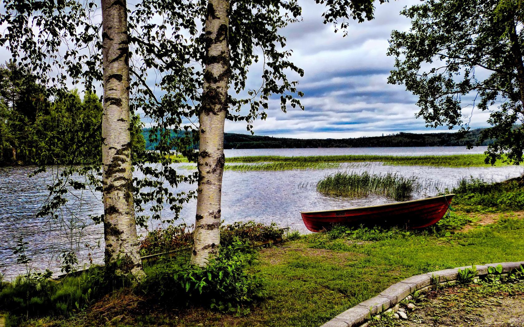 березы берег озеро  № 1195391 без смс