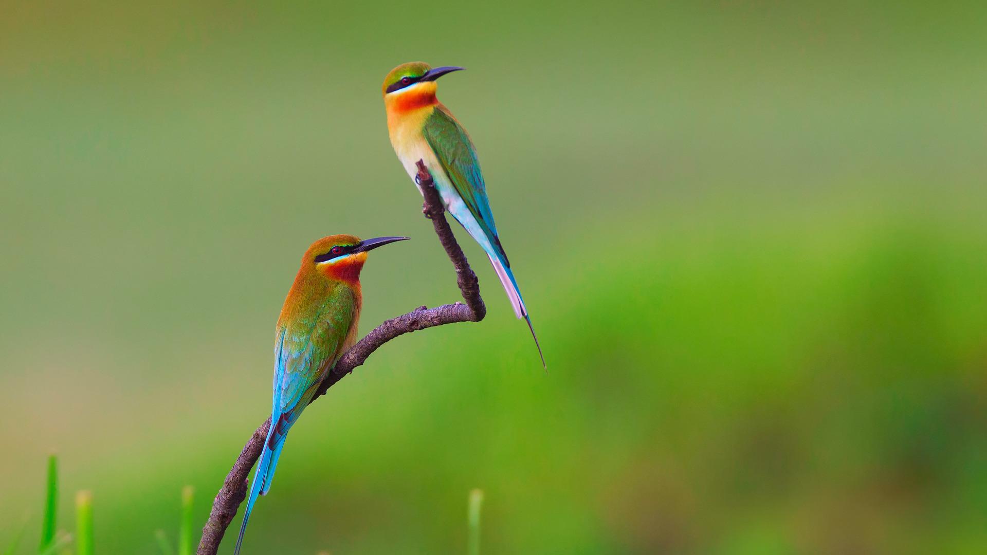 птица природа ветка колибри  № 1994315 без смс