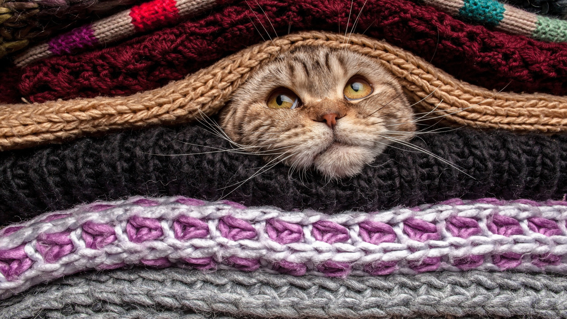 Download Wallpaper Eyes Cat Animal Funny Cute Situation Pet Head Covered Mustache Nose Gaze Sweater Wool Section Cats In Resolution 1920x1080