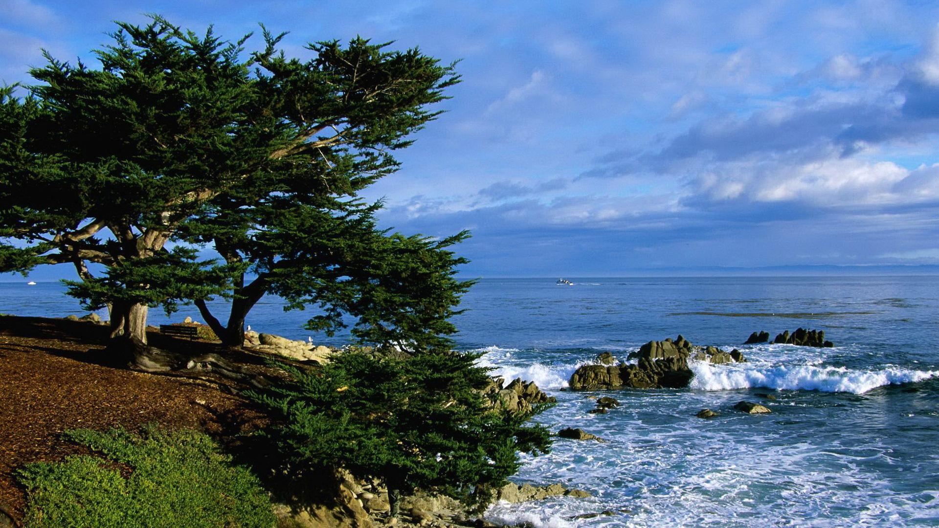дерево море высота  № 964195 без смс