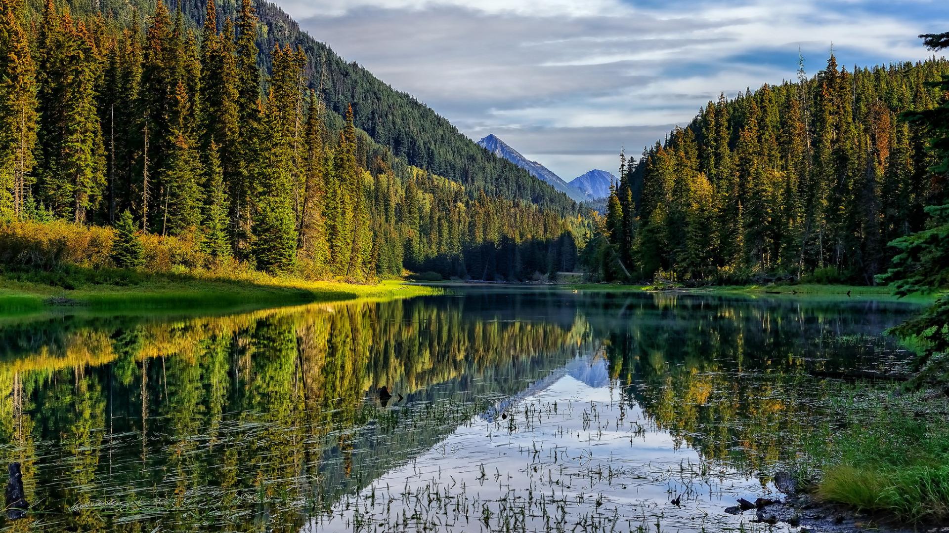 Обои для рабочего стола лес и озеро