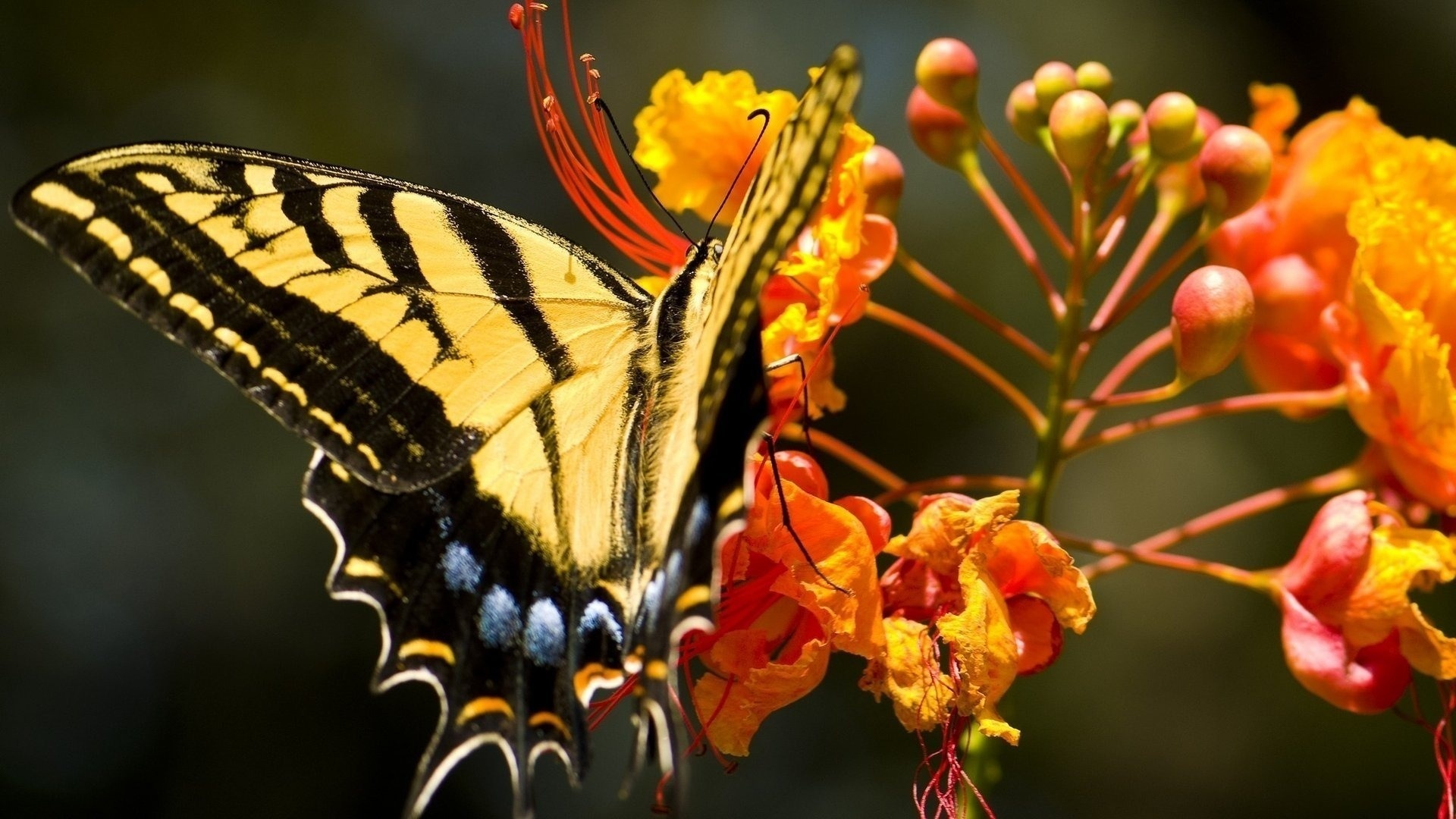 цветы,желтые,бабочка  № 664936 без смс