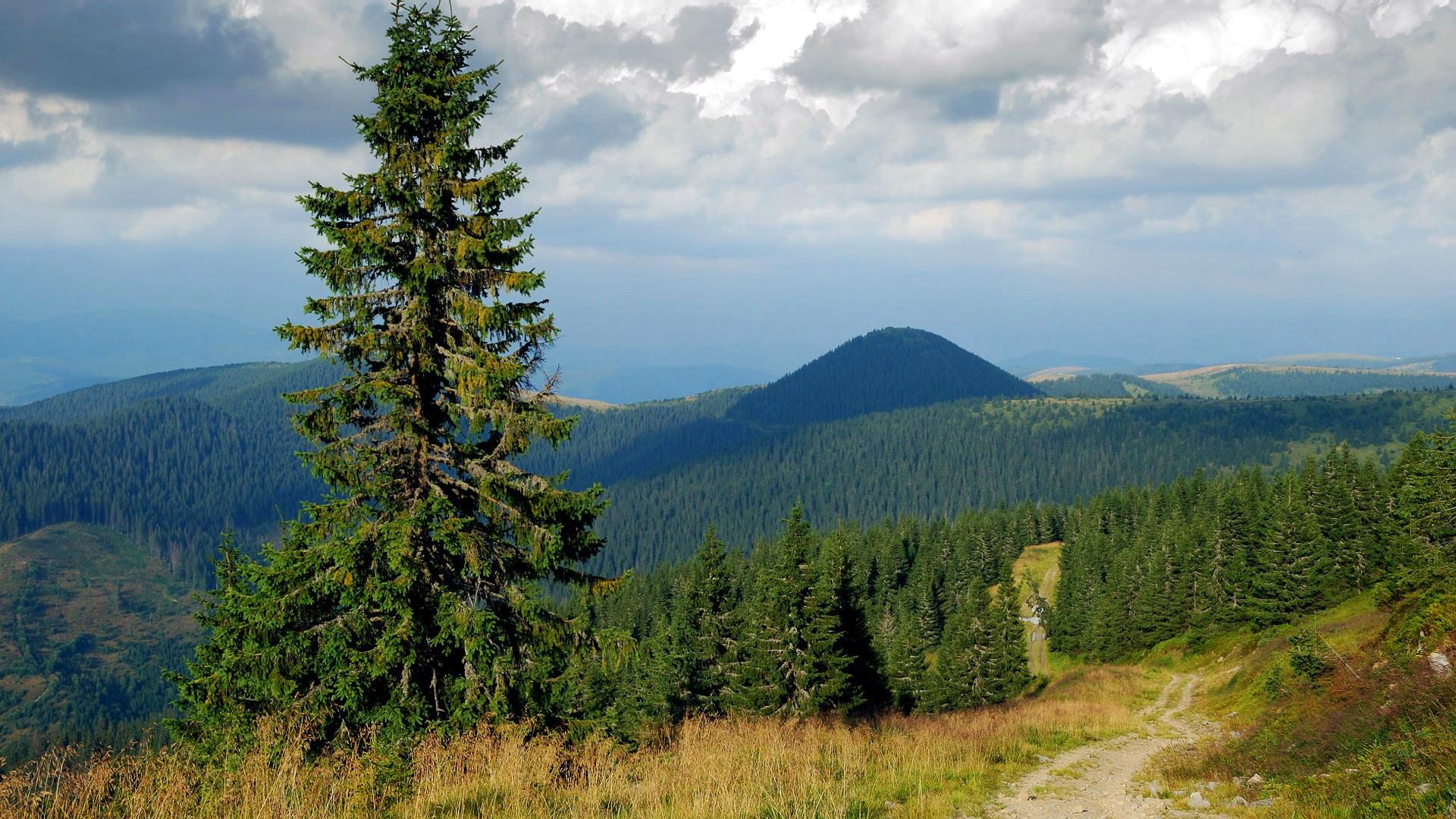 природа лес деревья ели гора облака небо  № 2757522 загрузить