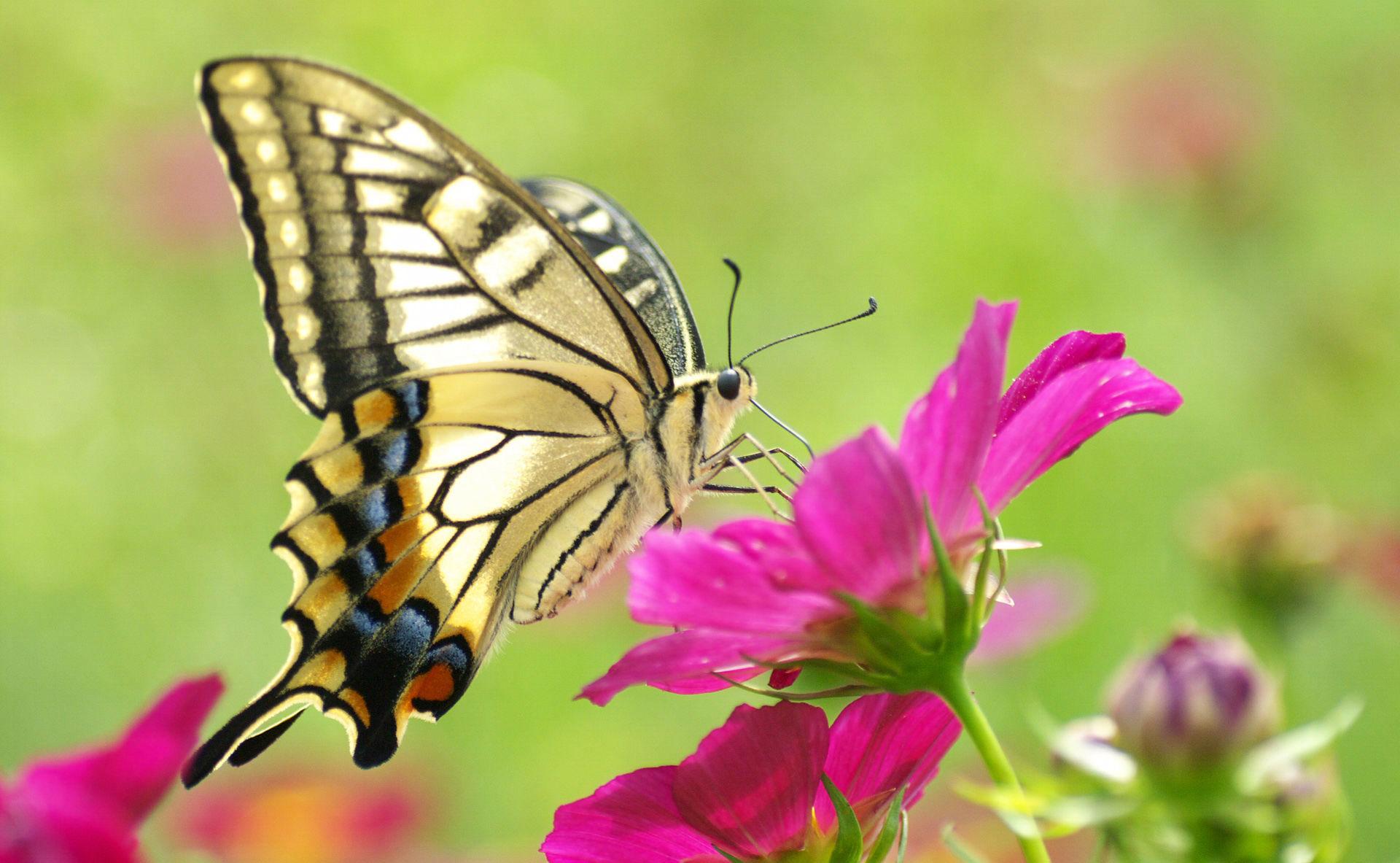 цветы,желтые,бабочка  № 664894 без смс