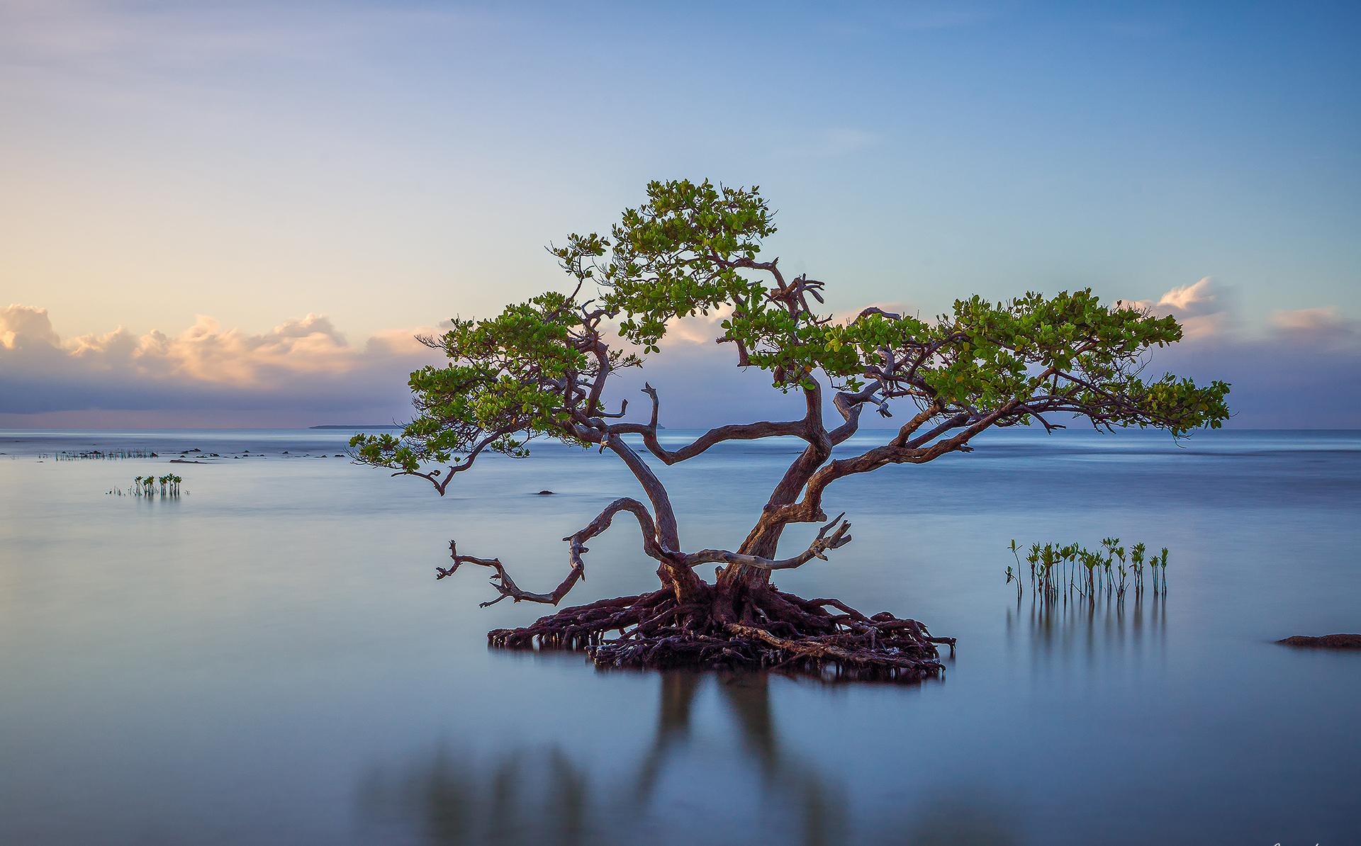 Море вода деревья облака  № 1034987  скачать