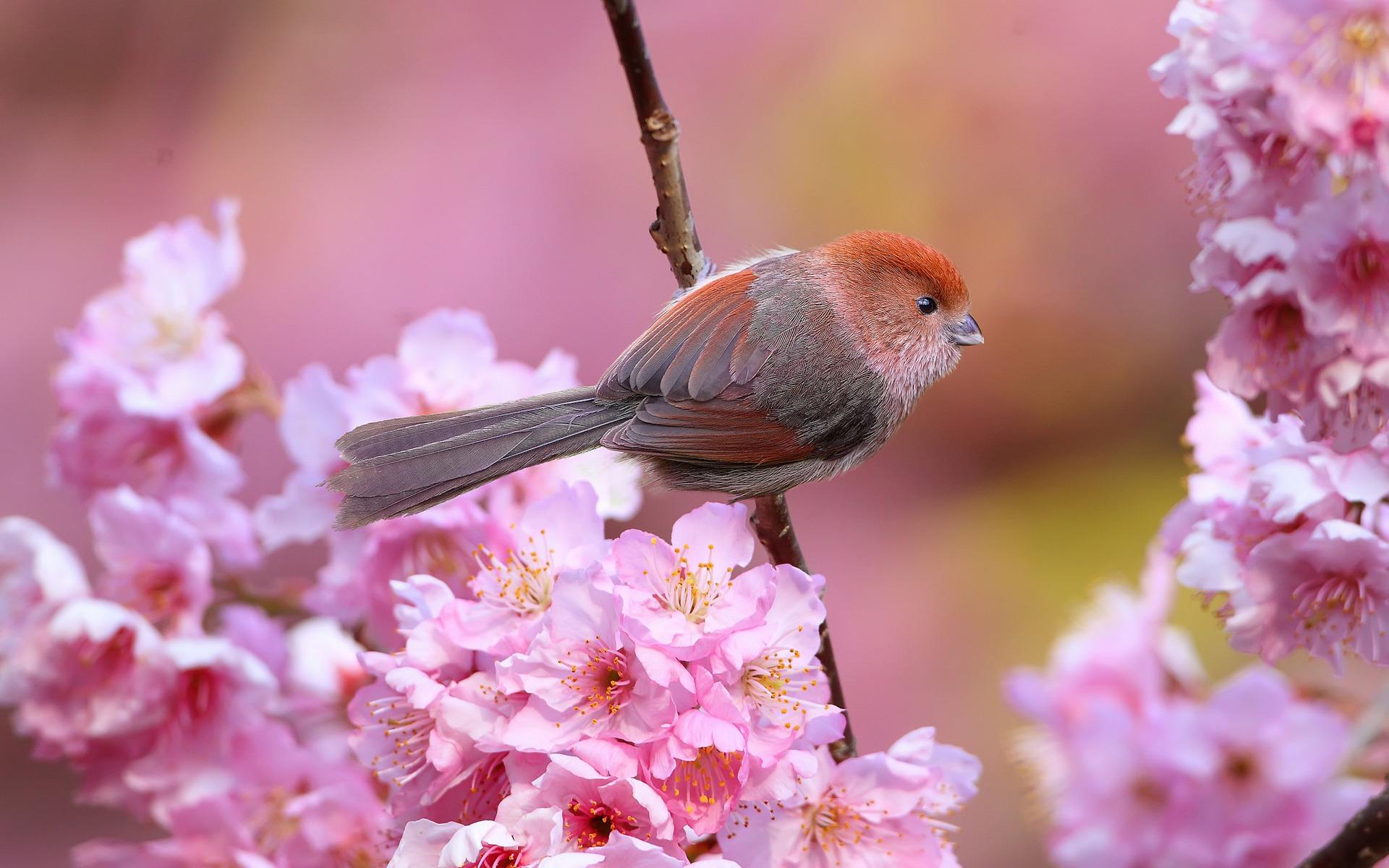 природа птицы животные весна  № 290763 бесплатно