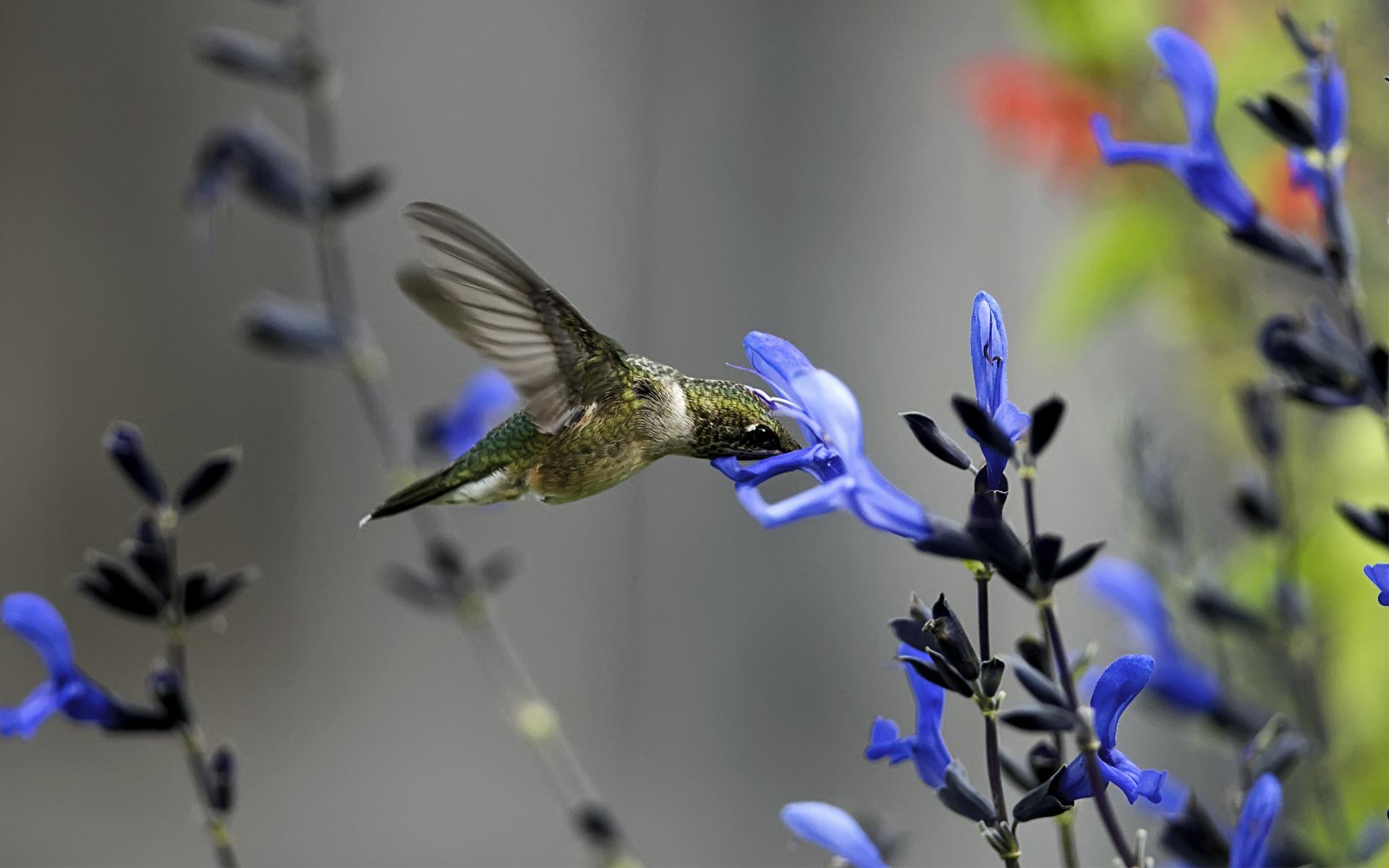 птица цветок  № 2034111 загрузить