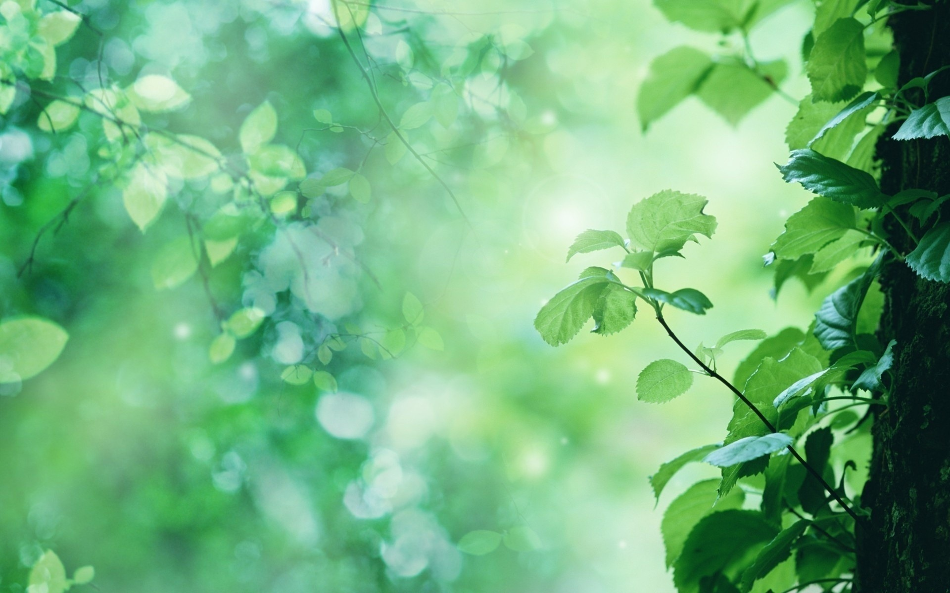 листья зелень фокус  № 1341627 без смс