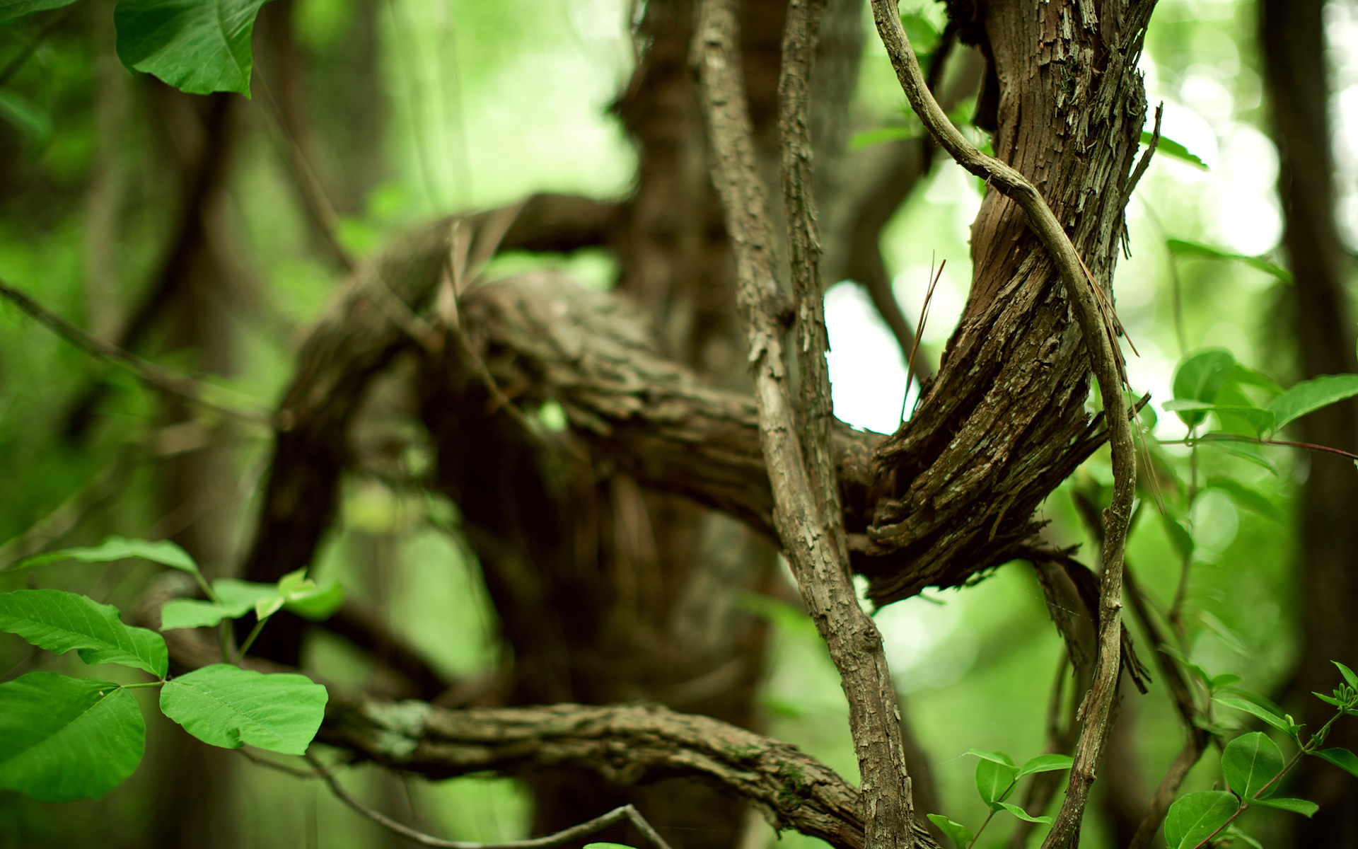 природа деревья ветки листья nature trees branches leaves  № 1275155 бесплатно