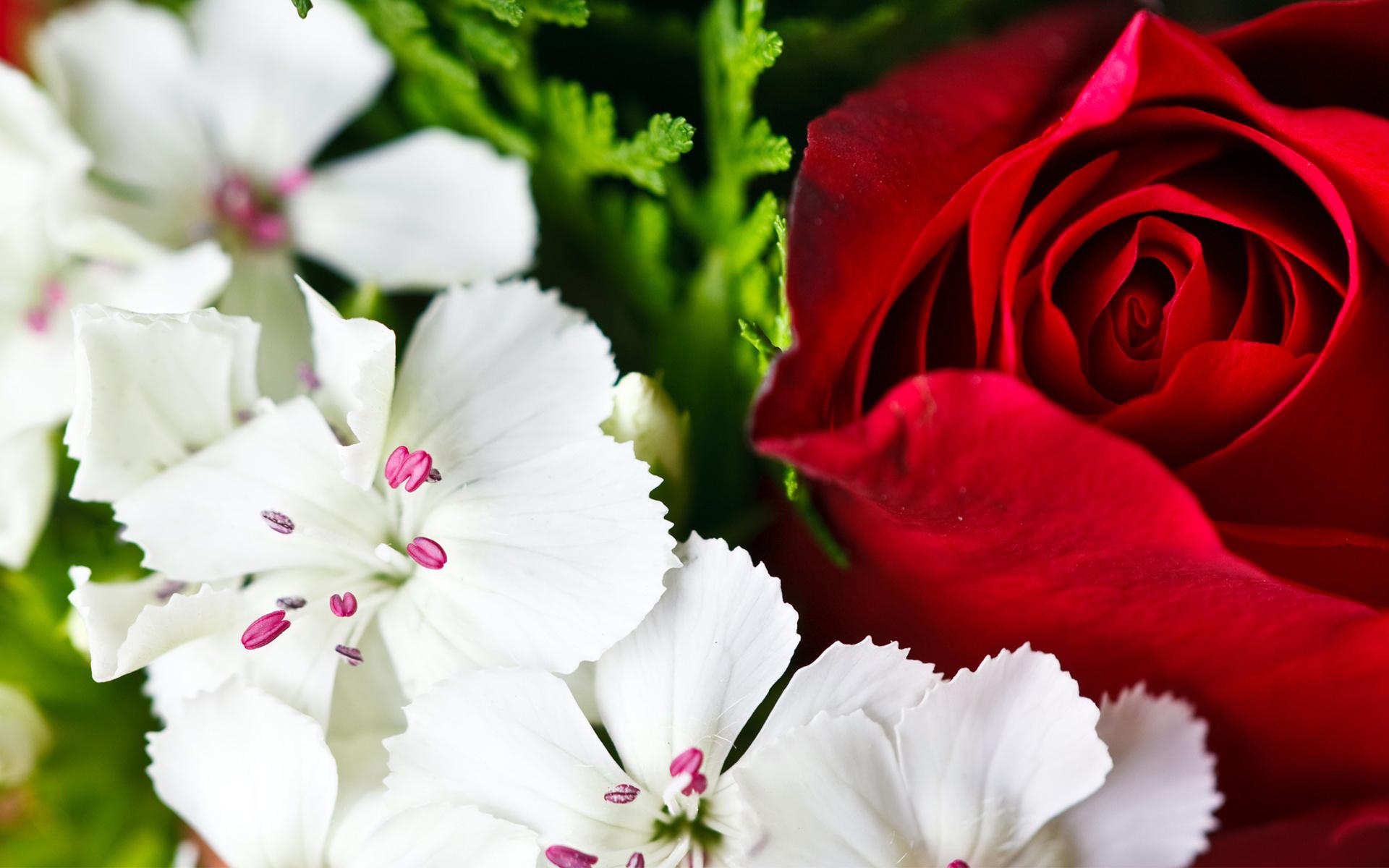 макро цветок пестик  № 3231612 без смс