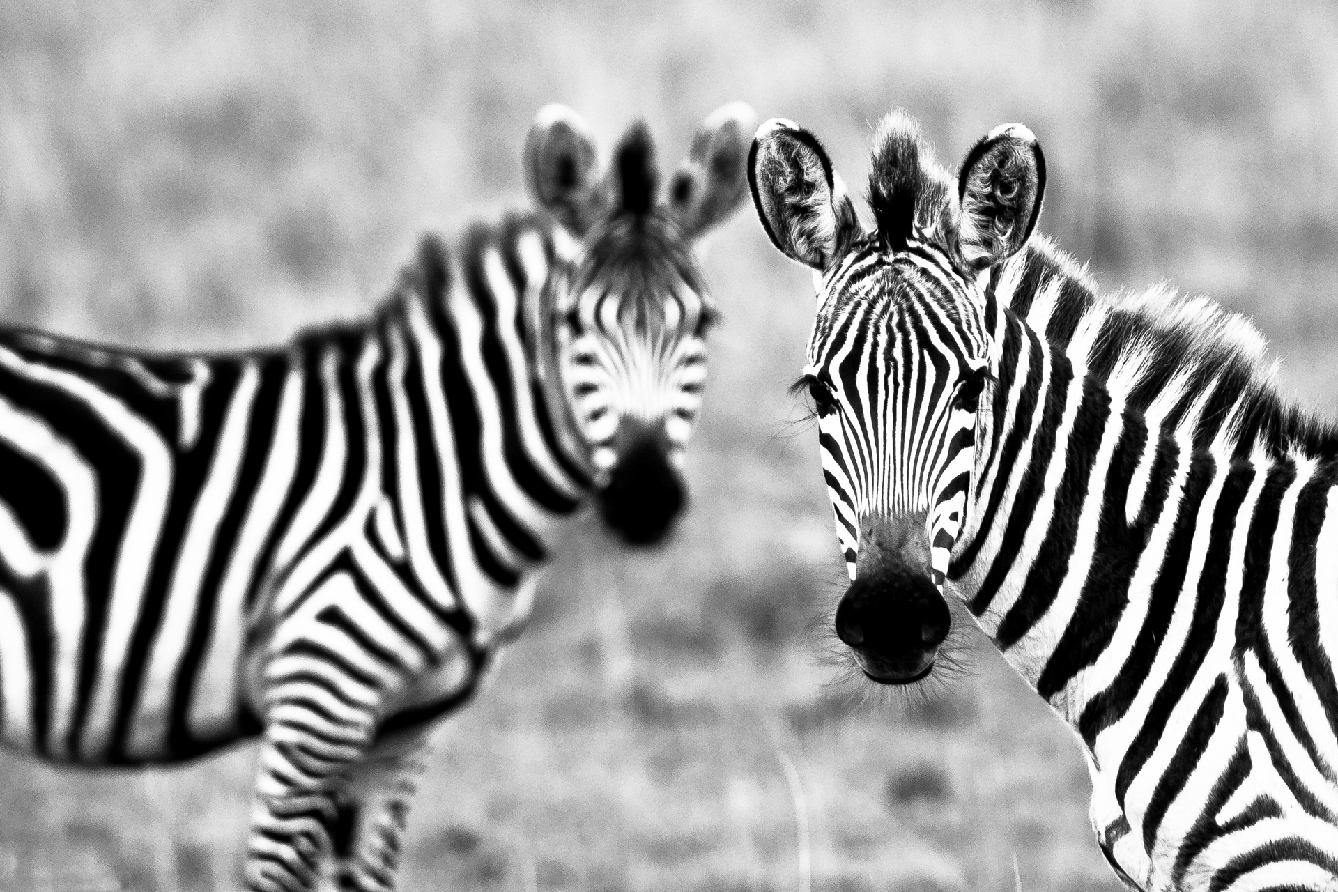 pictures-in-black-white-of