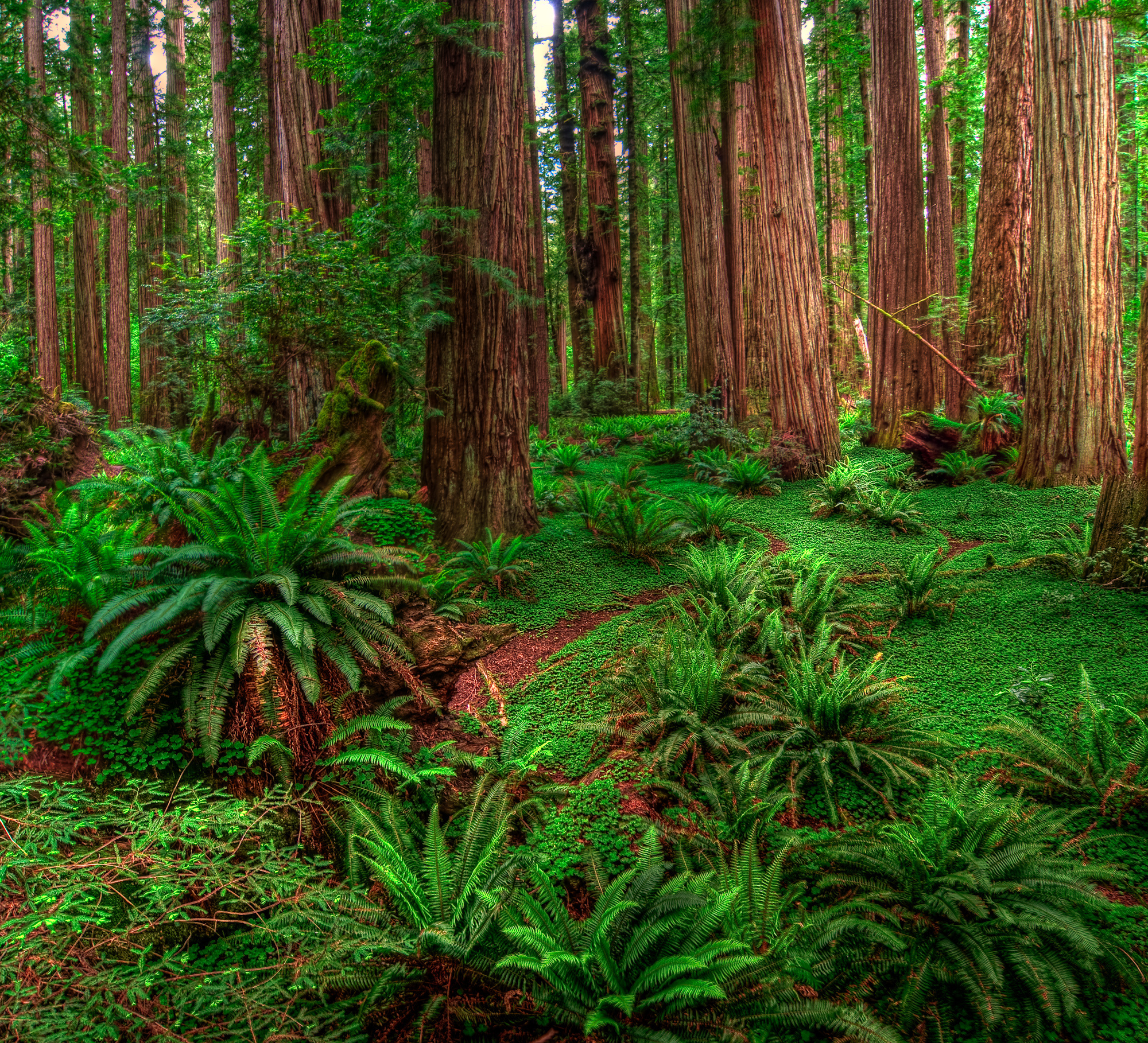 lo rewilding trees forests - HD1600×1454
