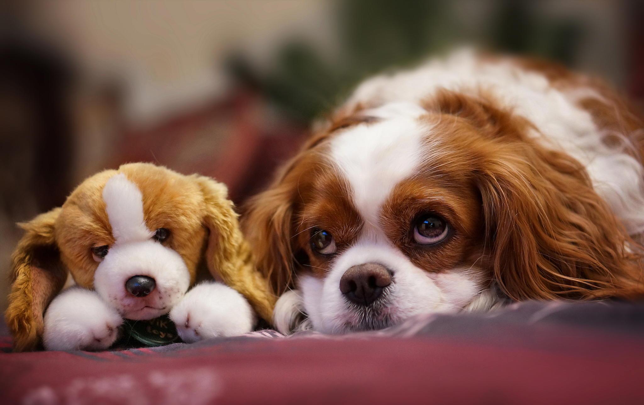 собака пёс взгляд морда dog view muzzle  № 690713  скачать