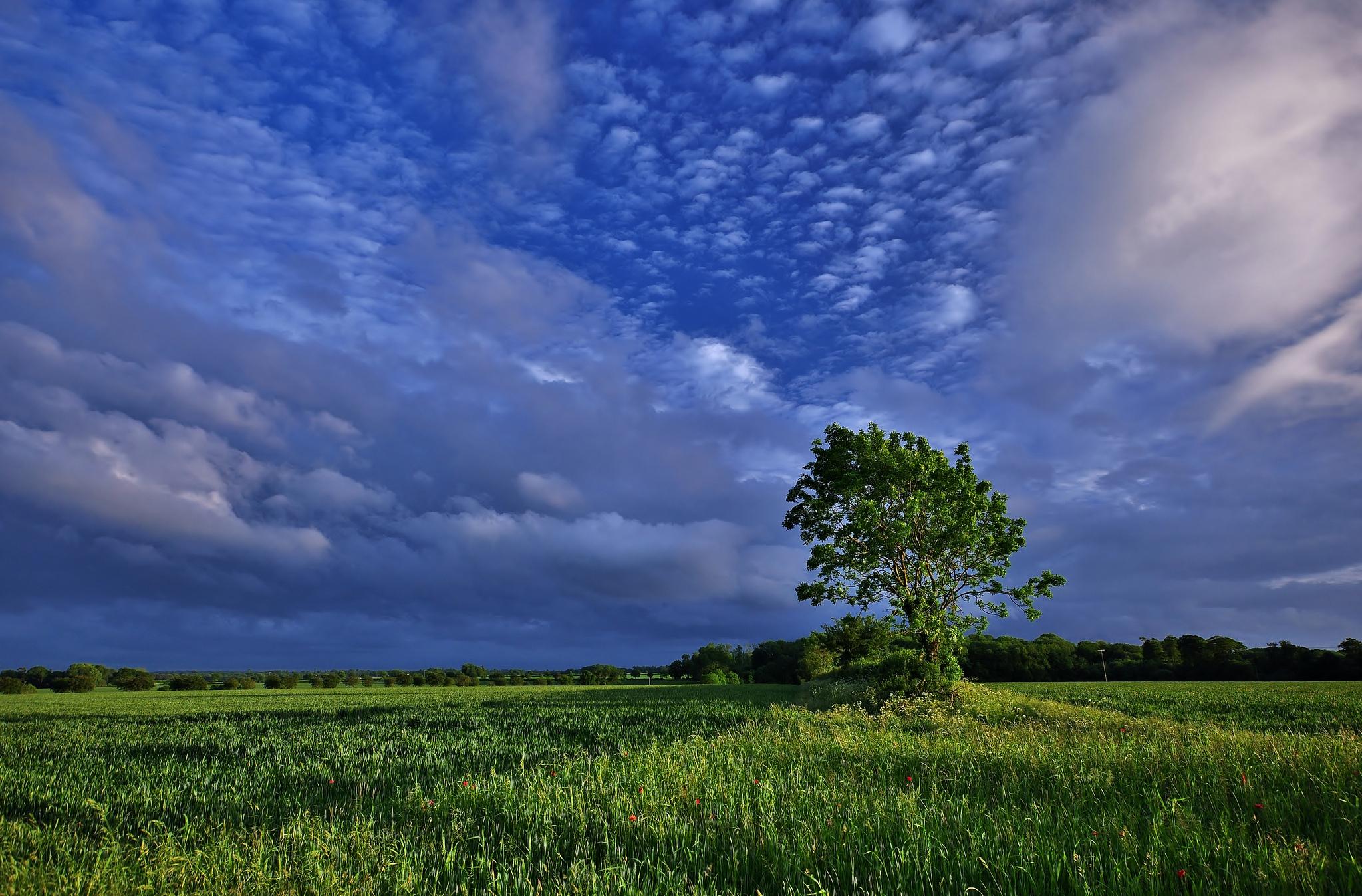 дерево поле  № 439096 бесплатно