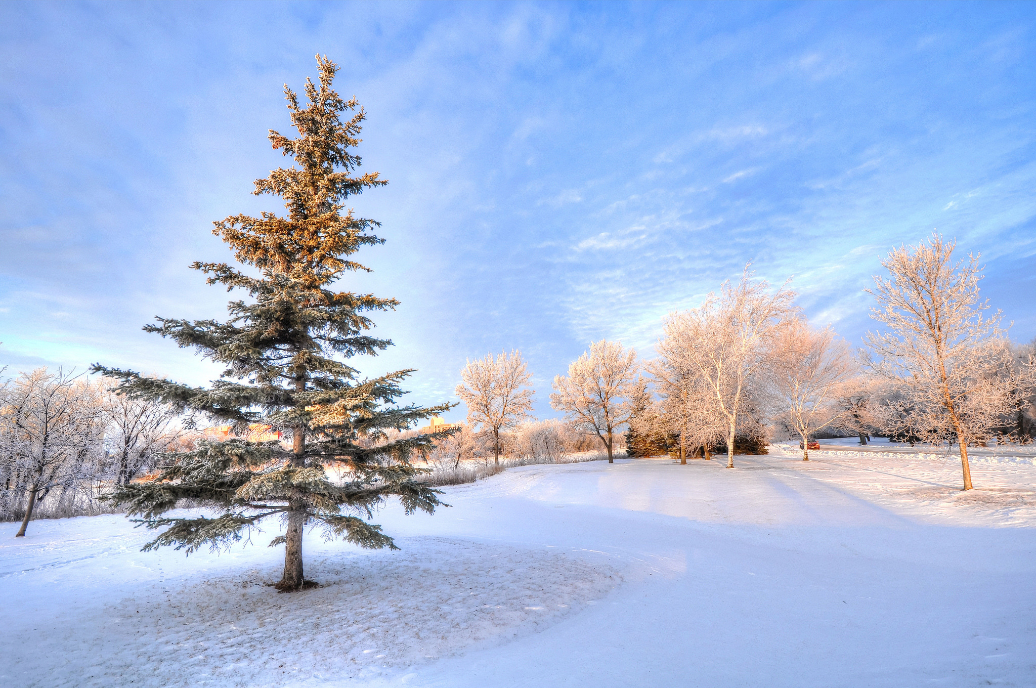 Парк зима ели  № 2388856 бесплатно