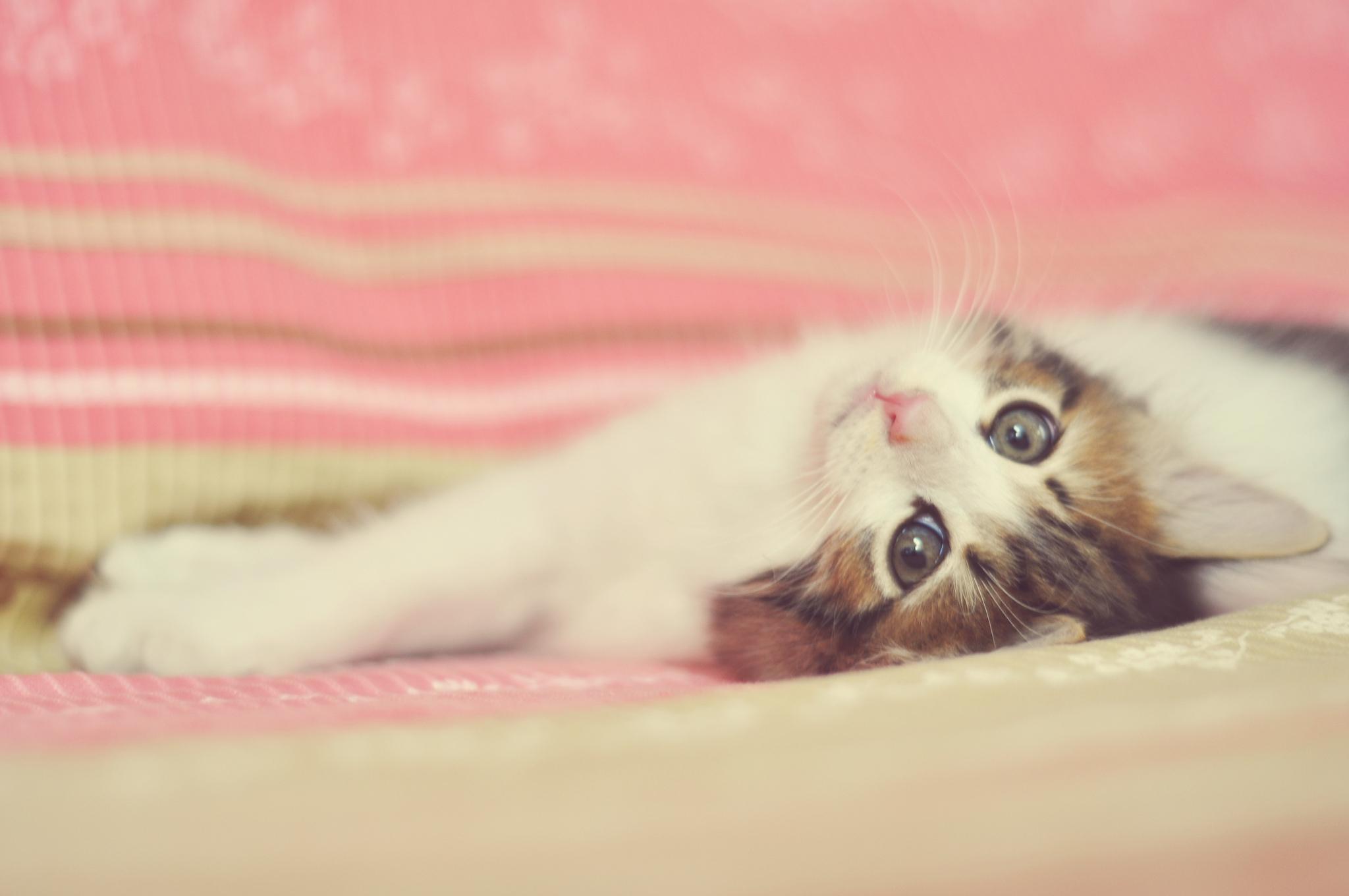 упитанный кот лапки  № 2866518 без смс