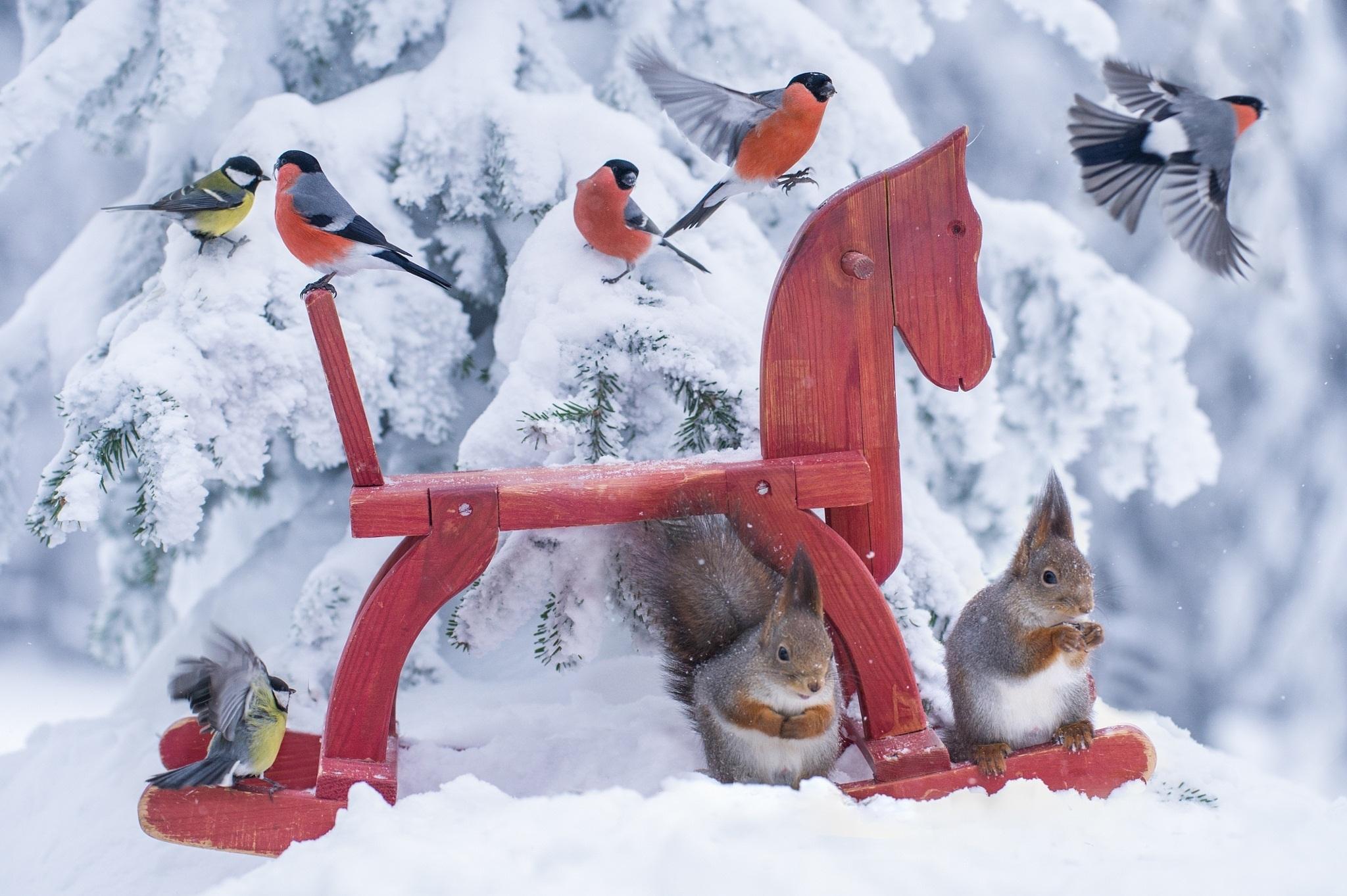 птички на снегу  № 101474  скачать