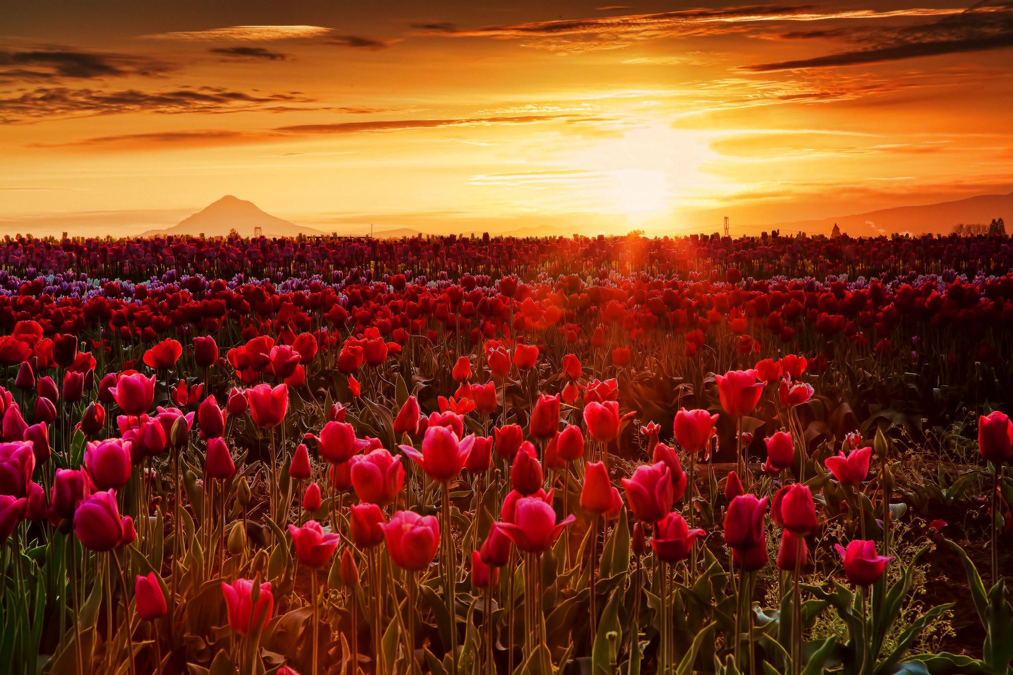 закат небо поляна цветы  № 3229865 загрузить