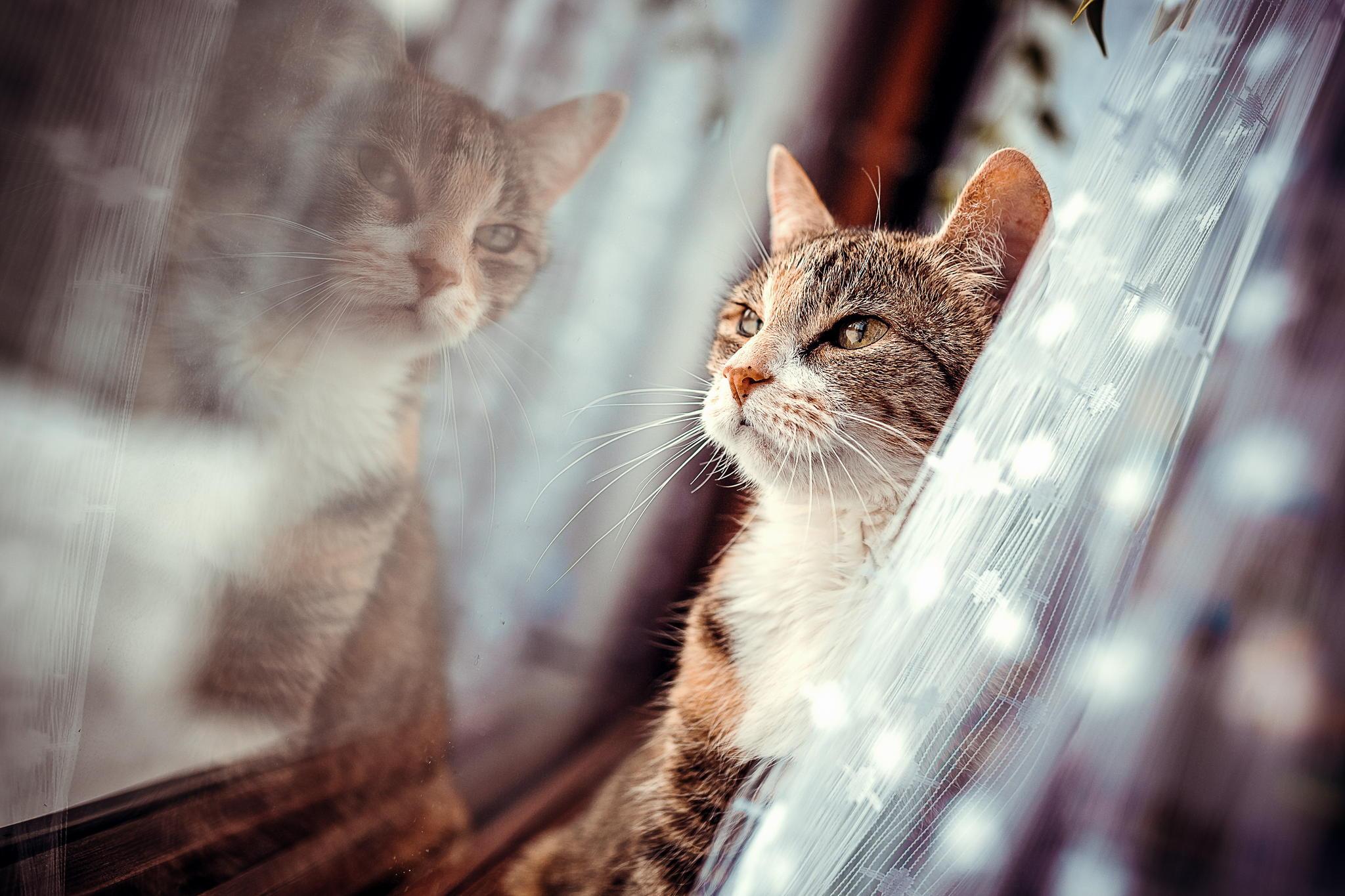 Кот с зеркалом  № 1689826 загрузить