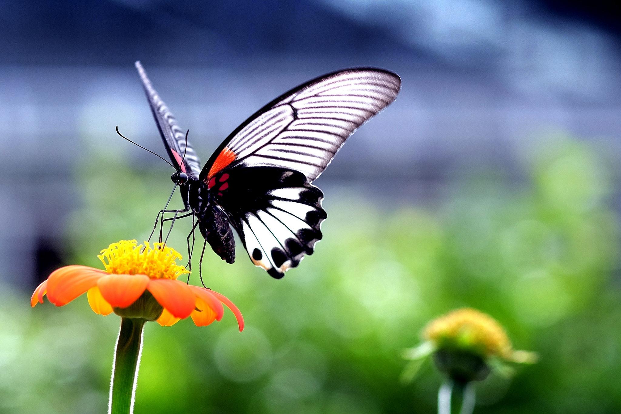 природа макро бабочка цветы желтые  № 1238608 загрузить