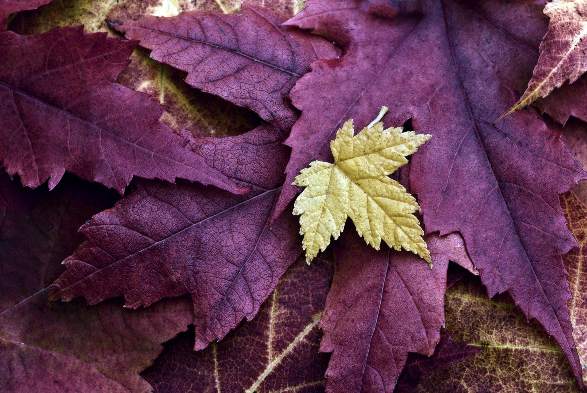 Опавшие желтые листья  № 1359372 загрузить