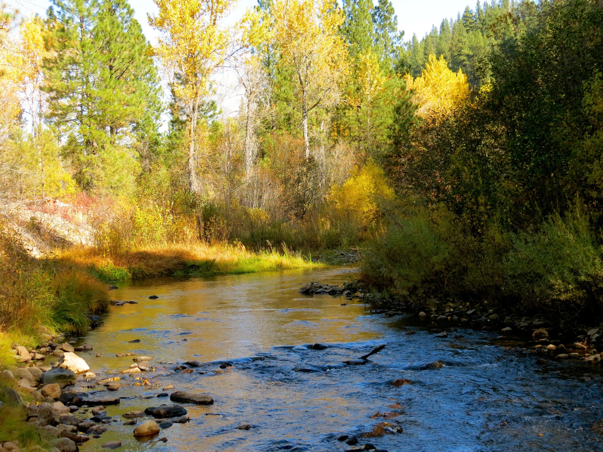 река осень деревья  № 3186332 бесплатно