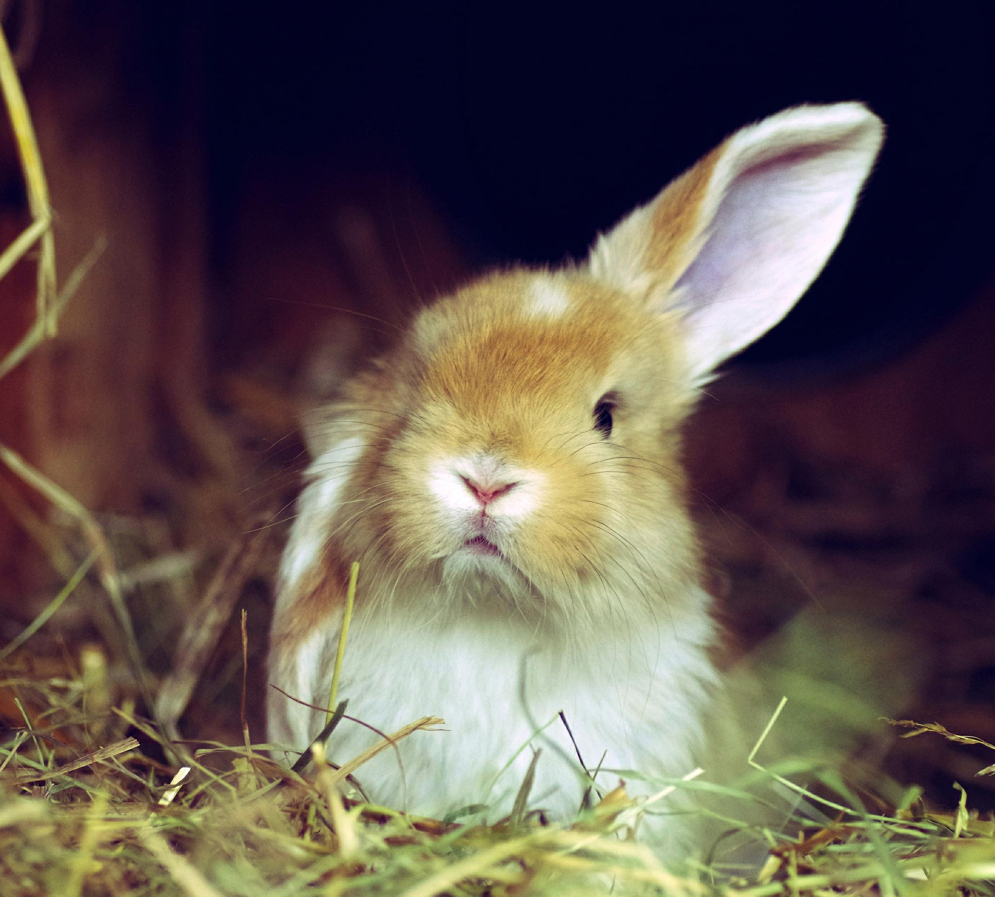 испуганный кролик  № 367706 бесплатно