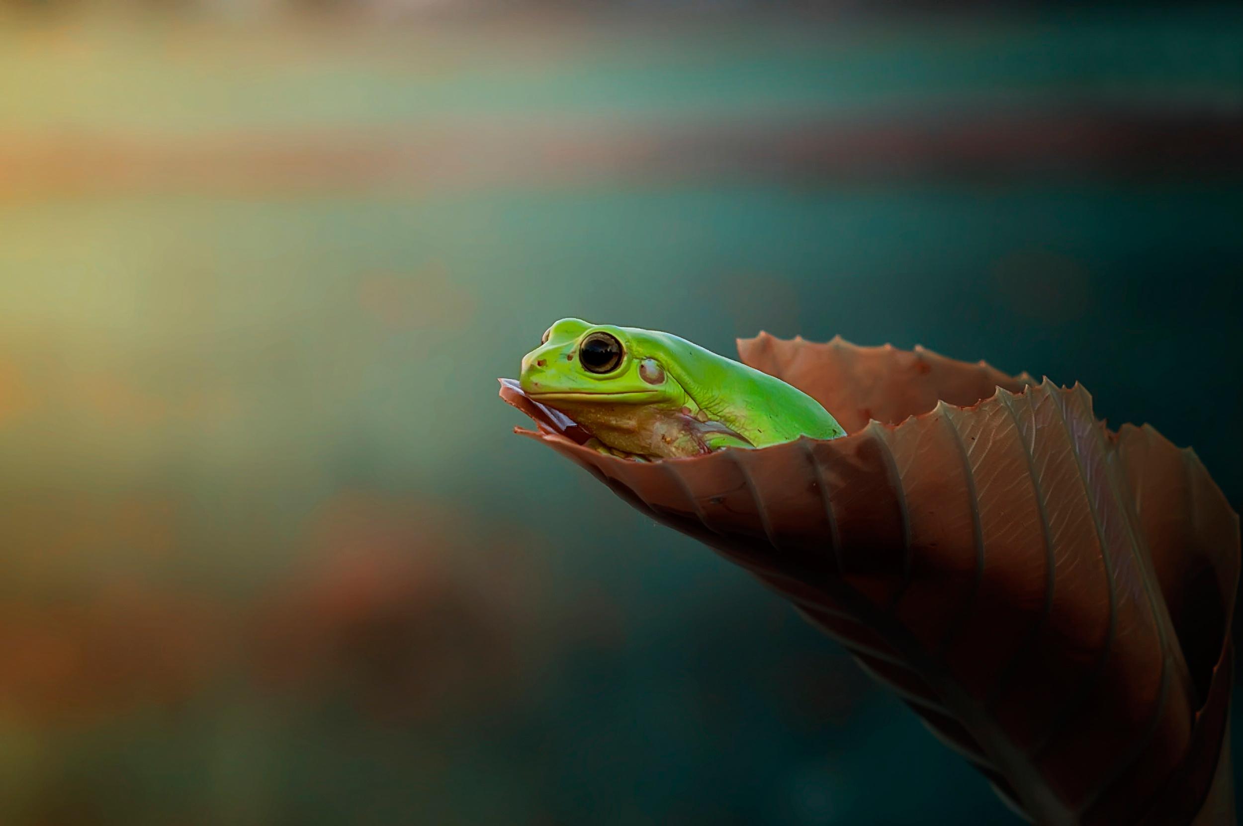 жаба лист фон  № 3164590 бесплатно