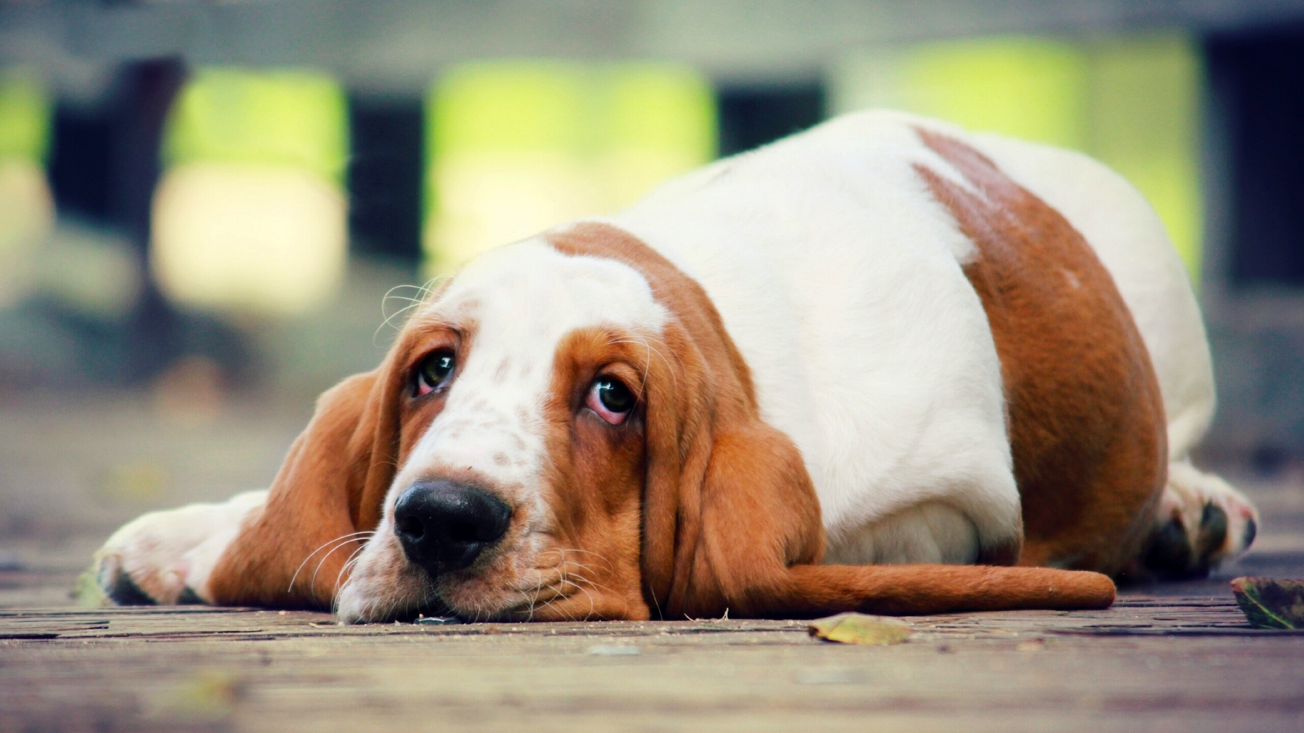 собака взгляд dog view  № 647848 без смс