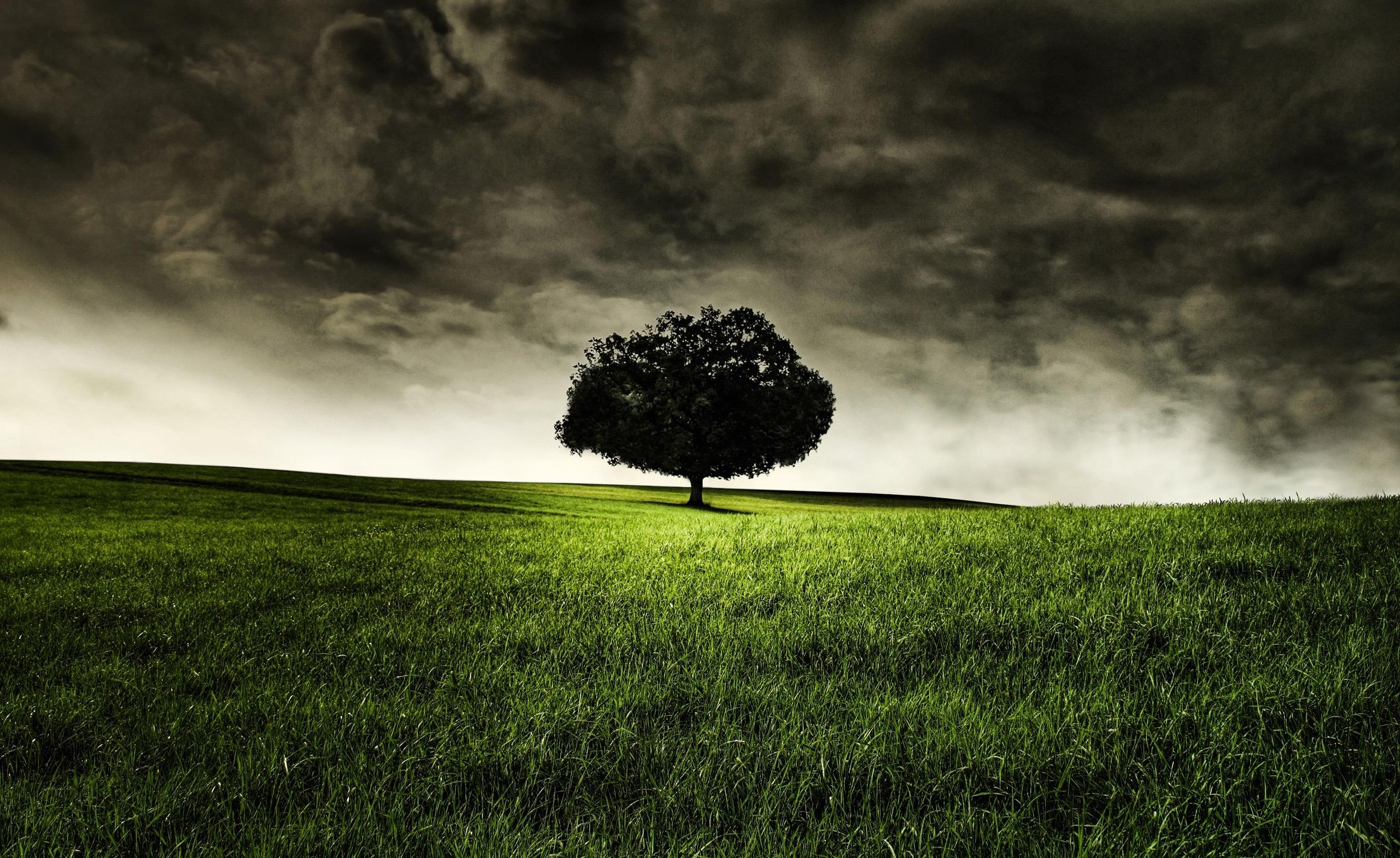 накренившееся дерево  № 989982  скачать