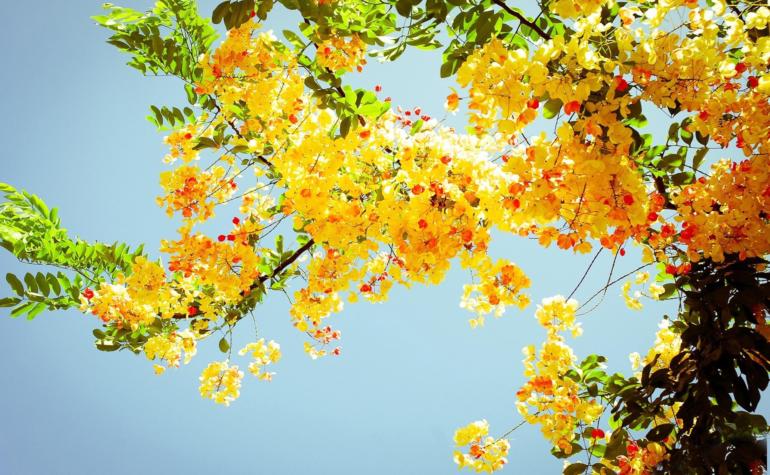 Желтый распустившийся цветок  № 731681  скачать
