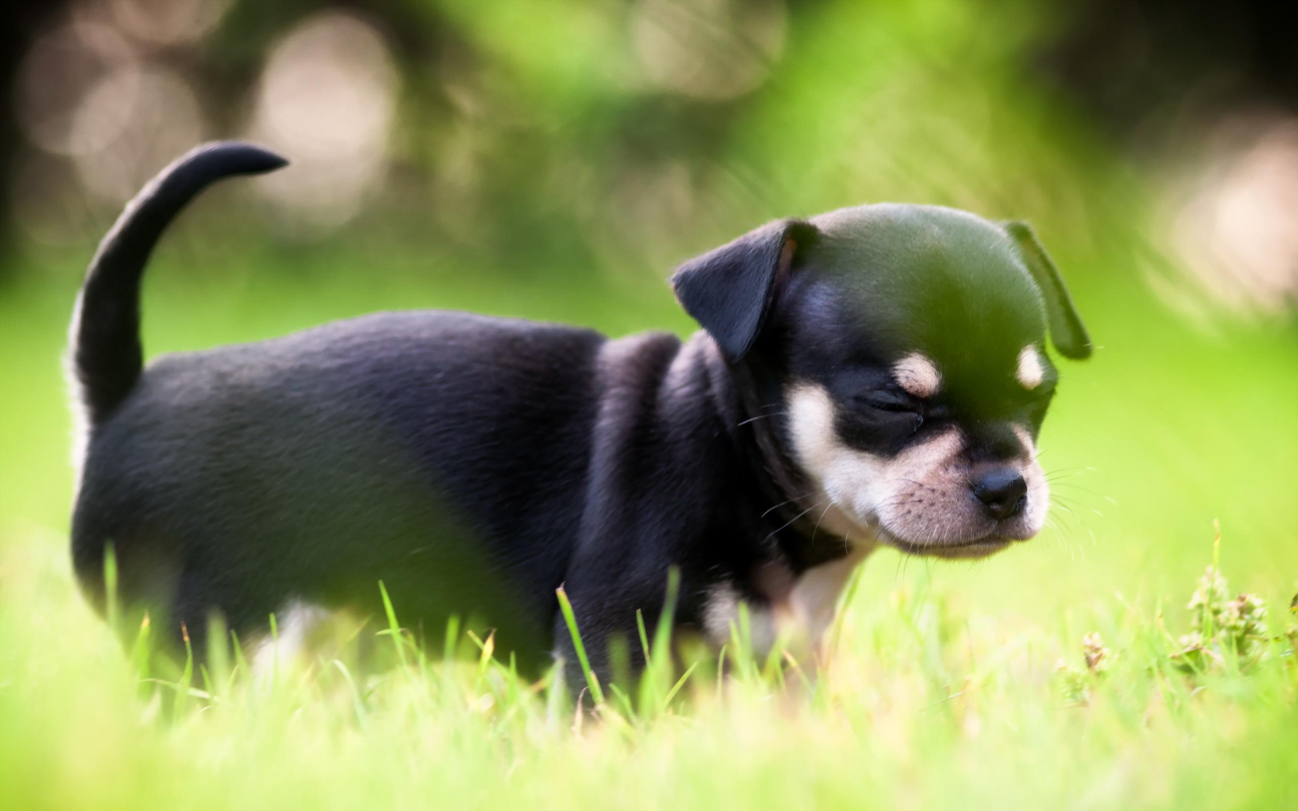 собака плитка свет  № 3646522 без смс
