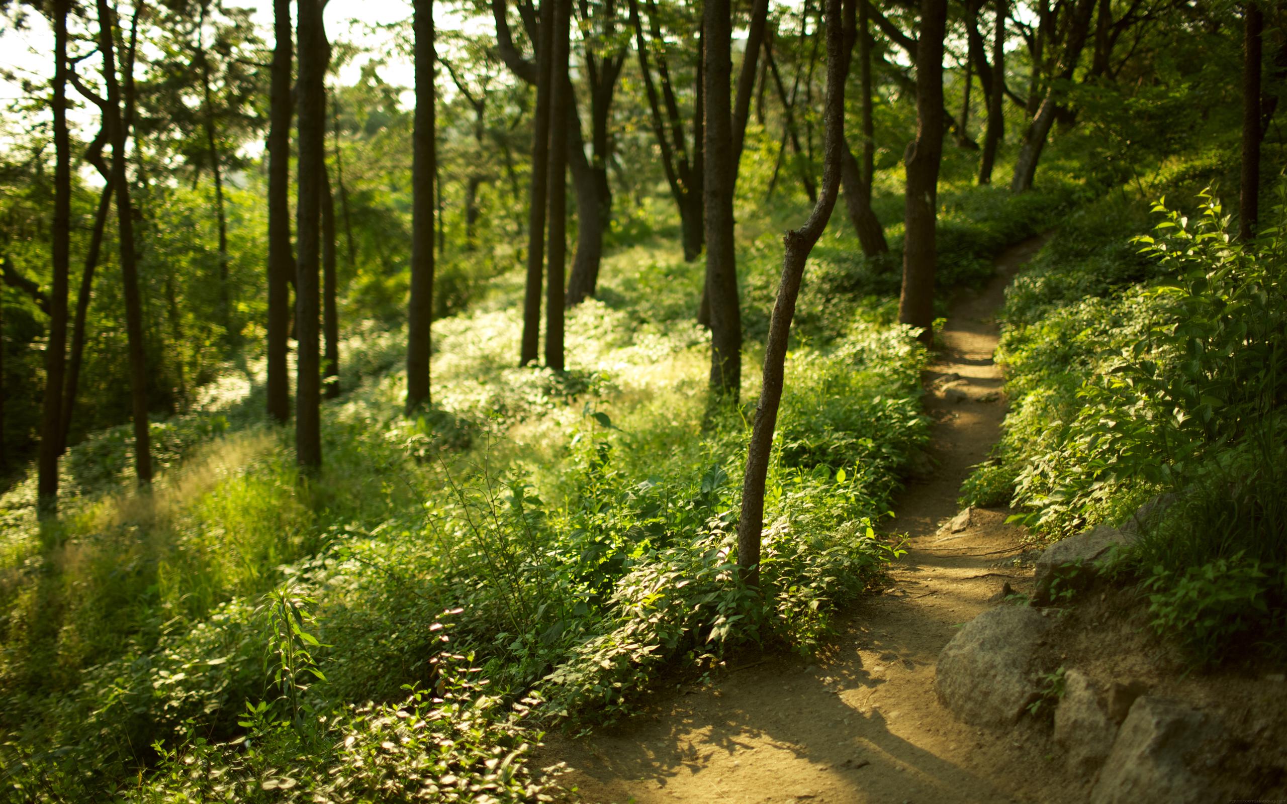 природа деревья лес тропа  № 1206358  скачать