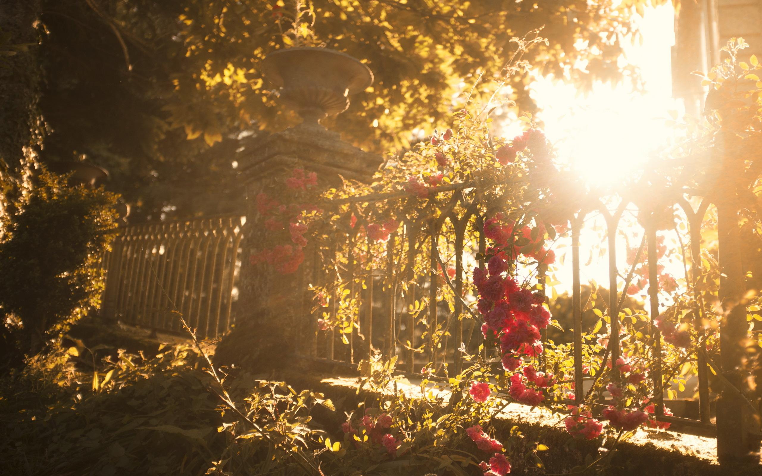 Забор цветы  № 2488829 бесплатно