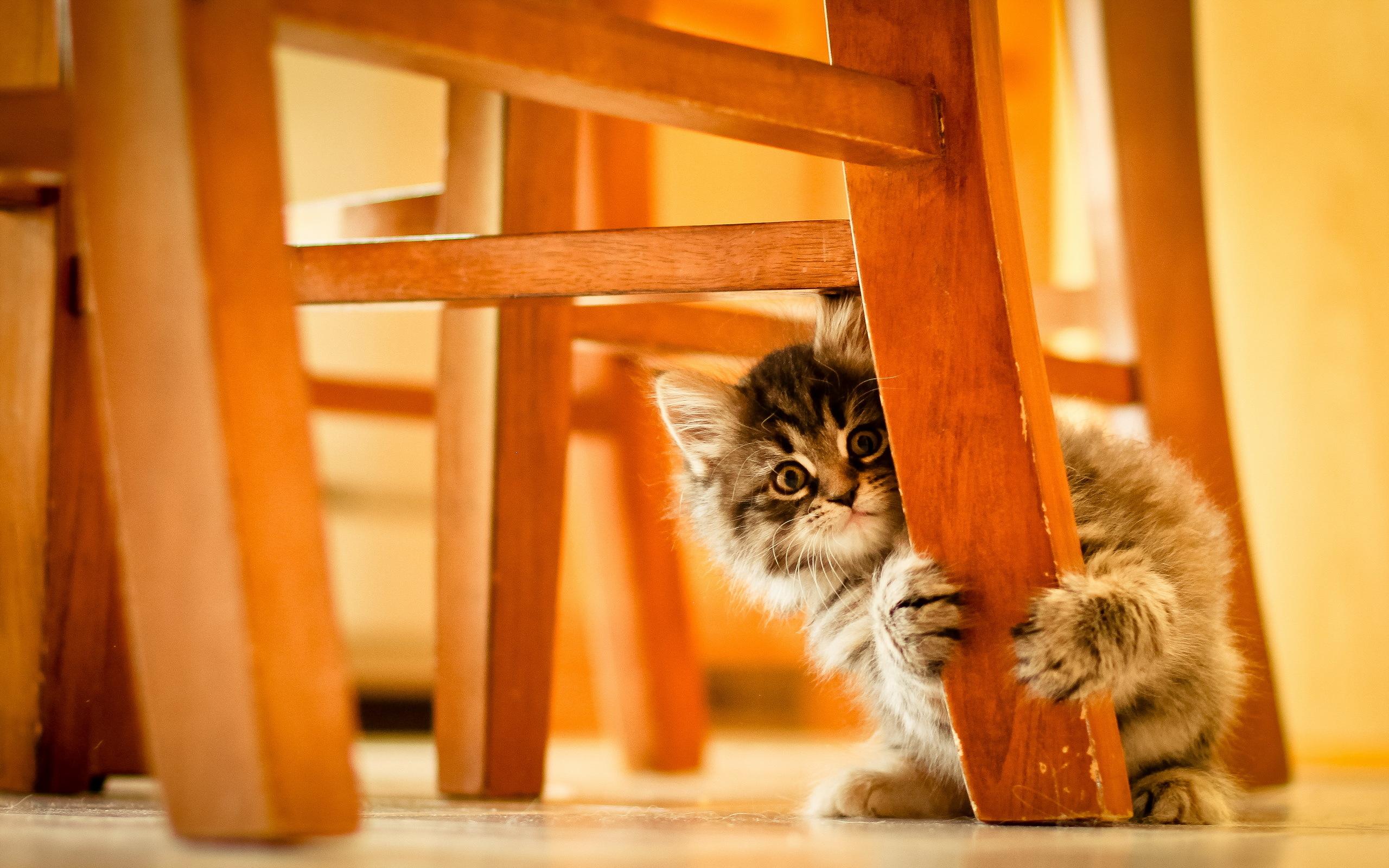 кот животное кресло морда  № 1943827 бесплатно