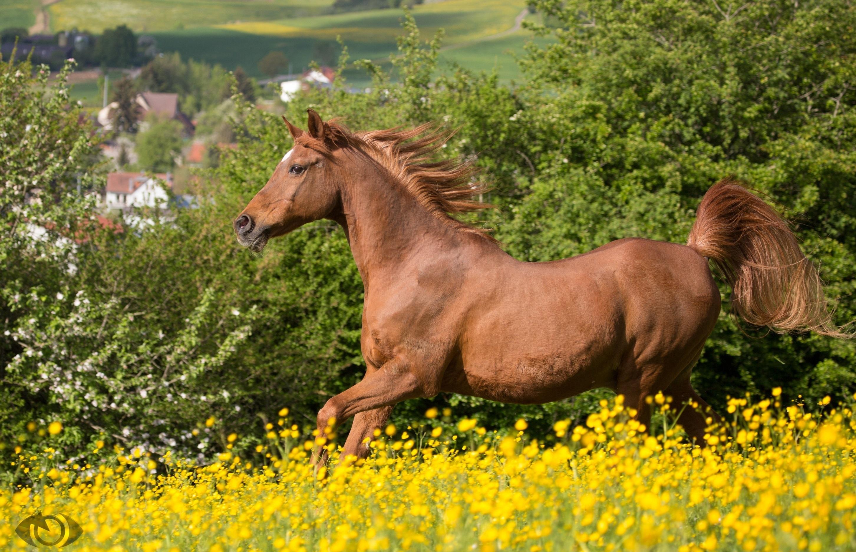 лошадь конь лес поляна  № 99156 без смс