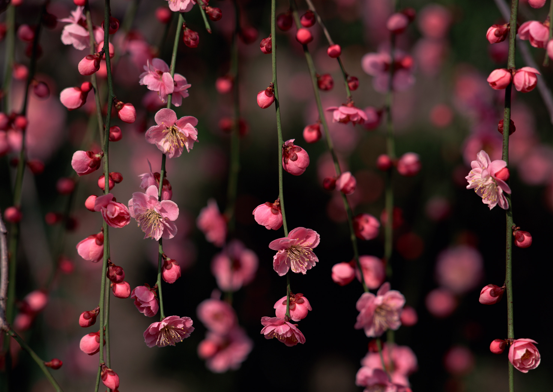 нежные цветочки на ветке  № 1333970 загрузить
