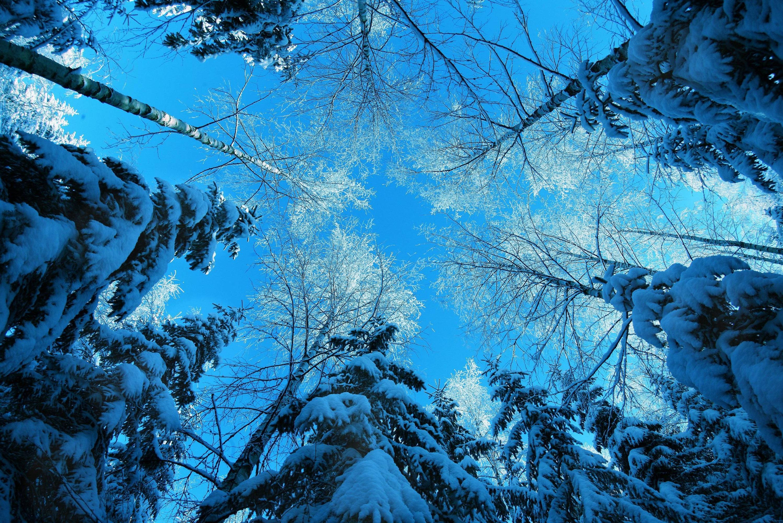 природа деревья ели зима снег небо  № 2803201 без смс