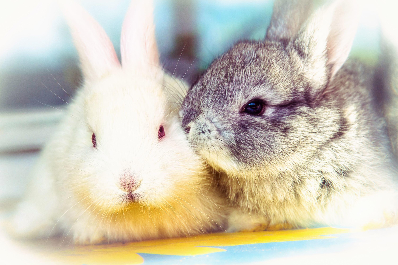 кролик девушка природа животное  № 1594141 бесплатно