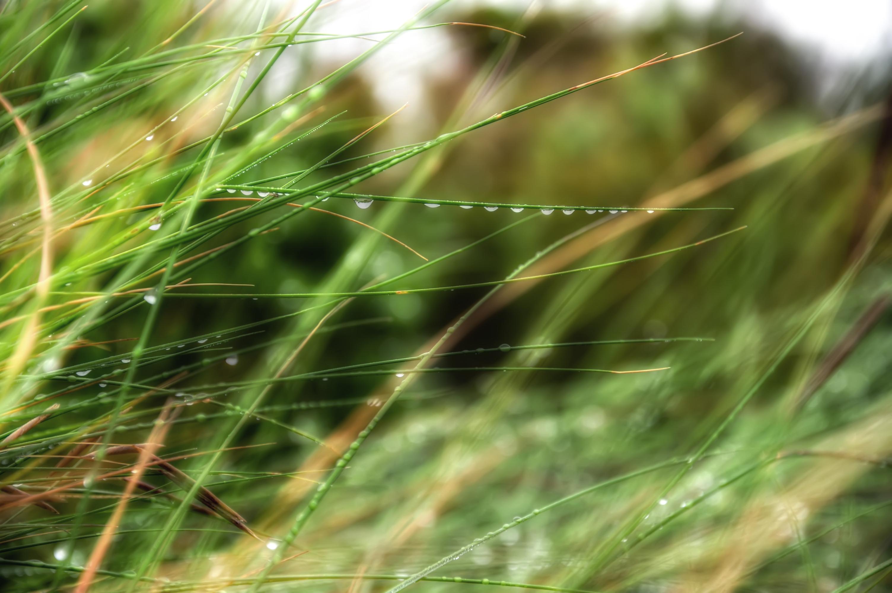 природа макро трава  № 2758780  скачать