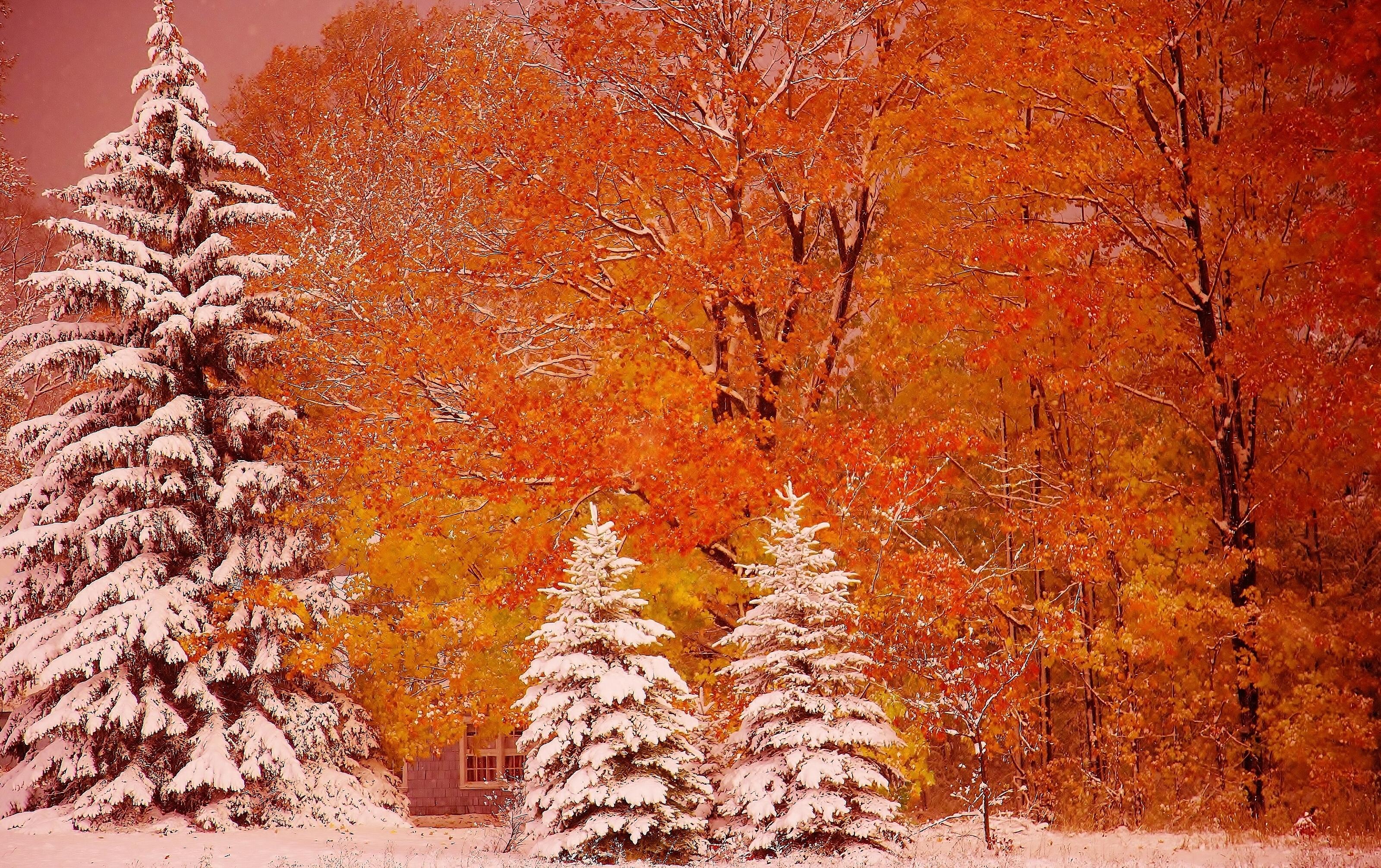 обои на рабочий стол природа осень и зима цветы № 230127  скачать