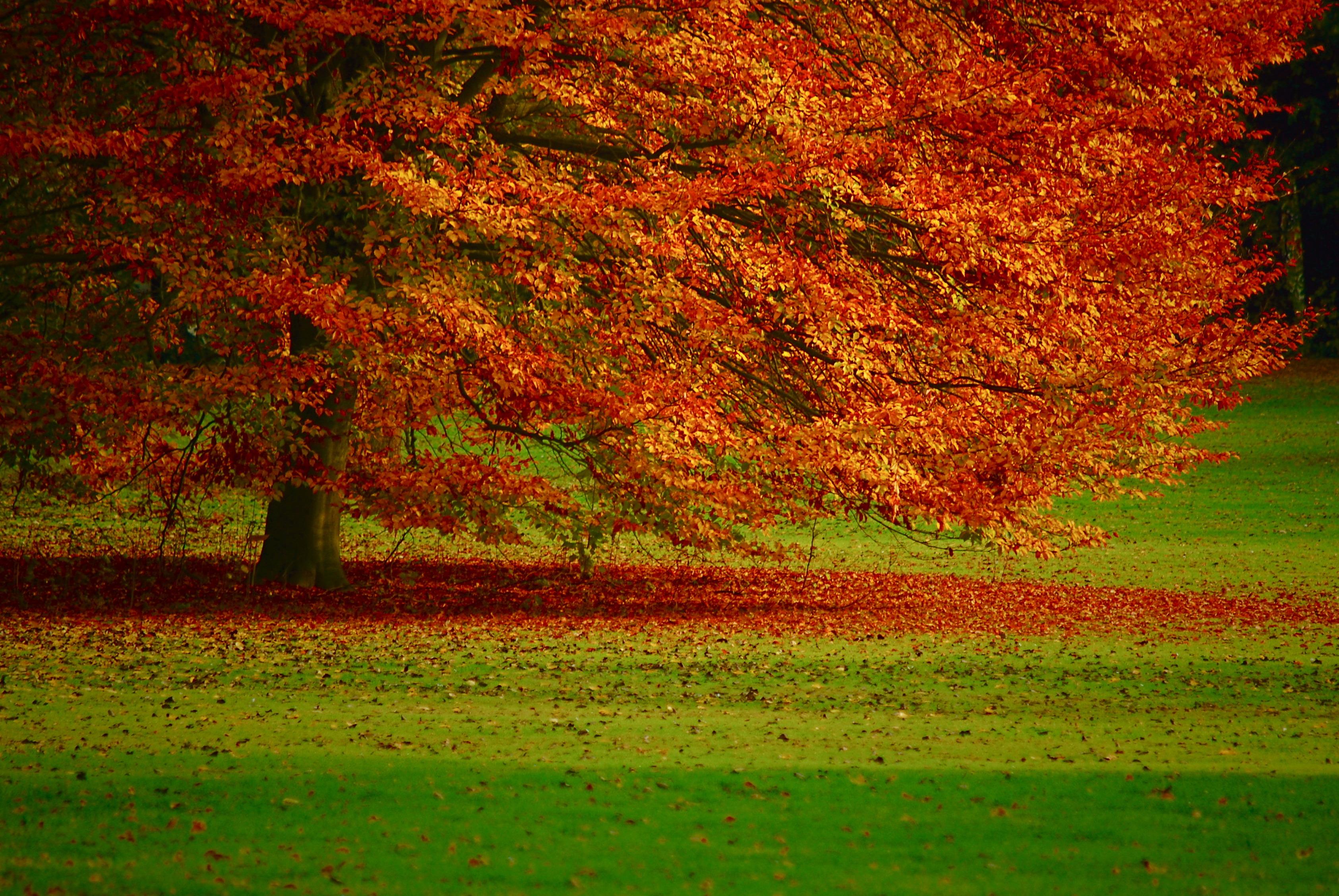 Осенние Обои На Стол