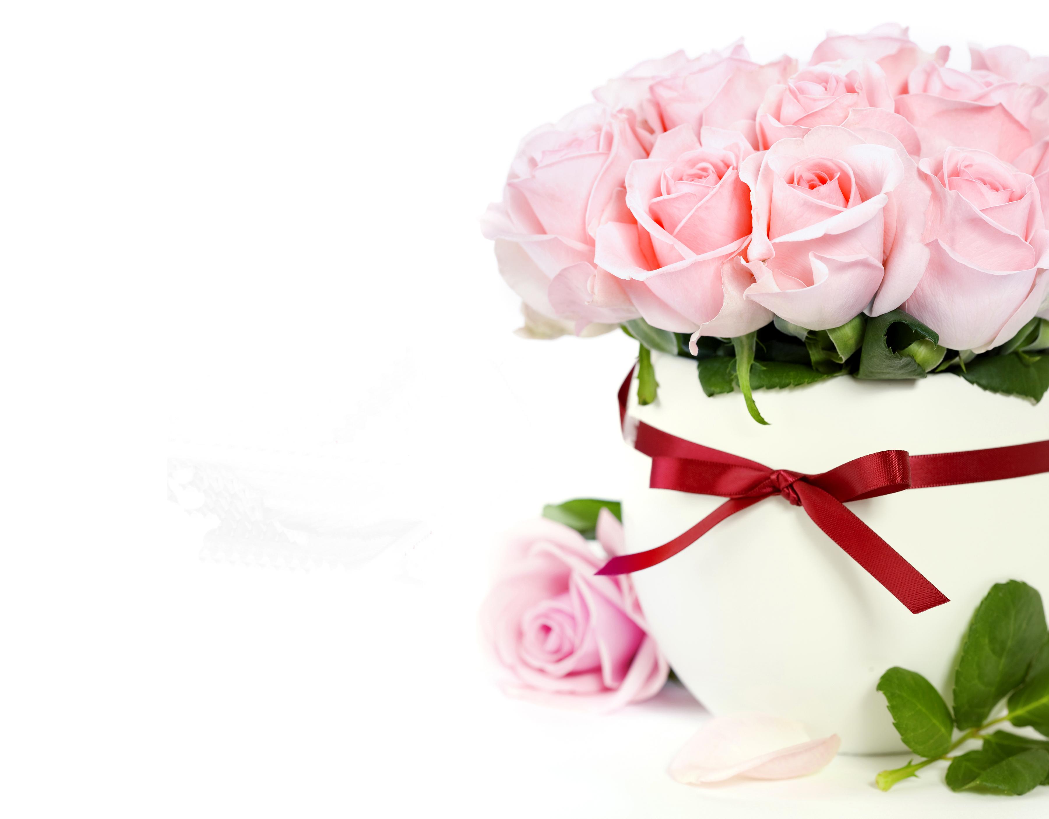 розы,упаковка,букет,праздник  № 759882 без смс