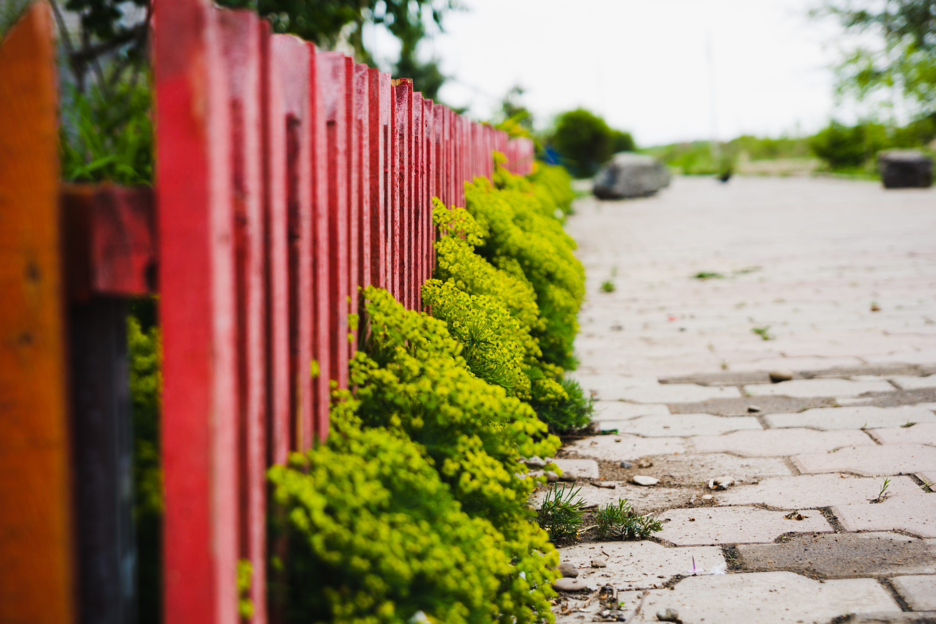 Забор цветы  № 2488817 бесплатно