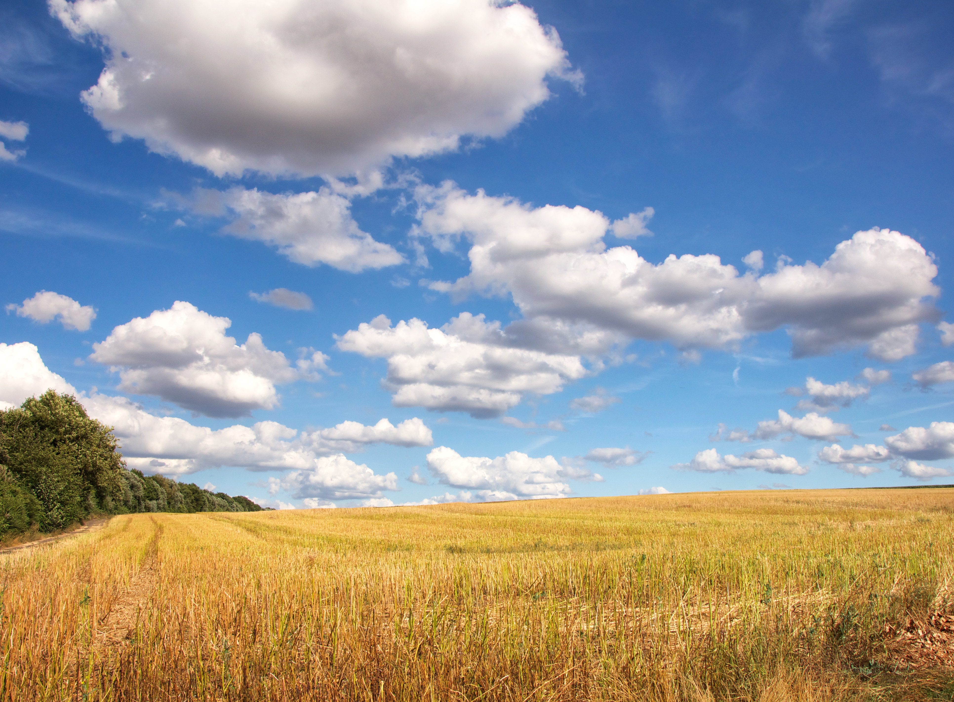 природа облака небо горизонт поле  № 204305 бесплатно