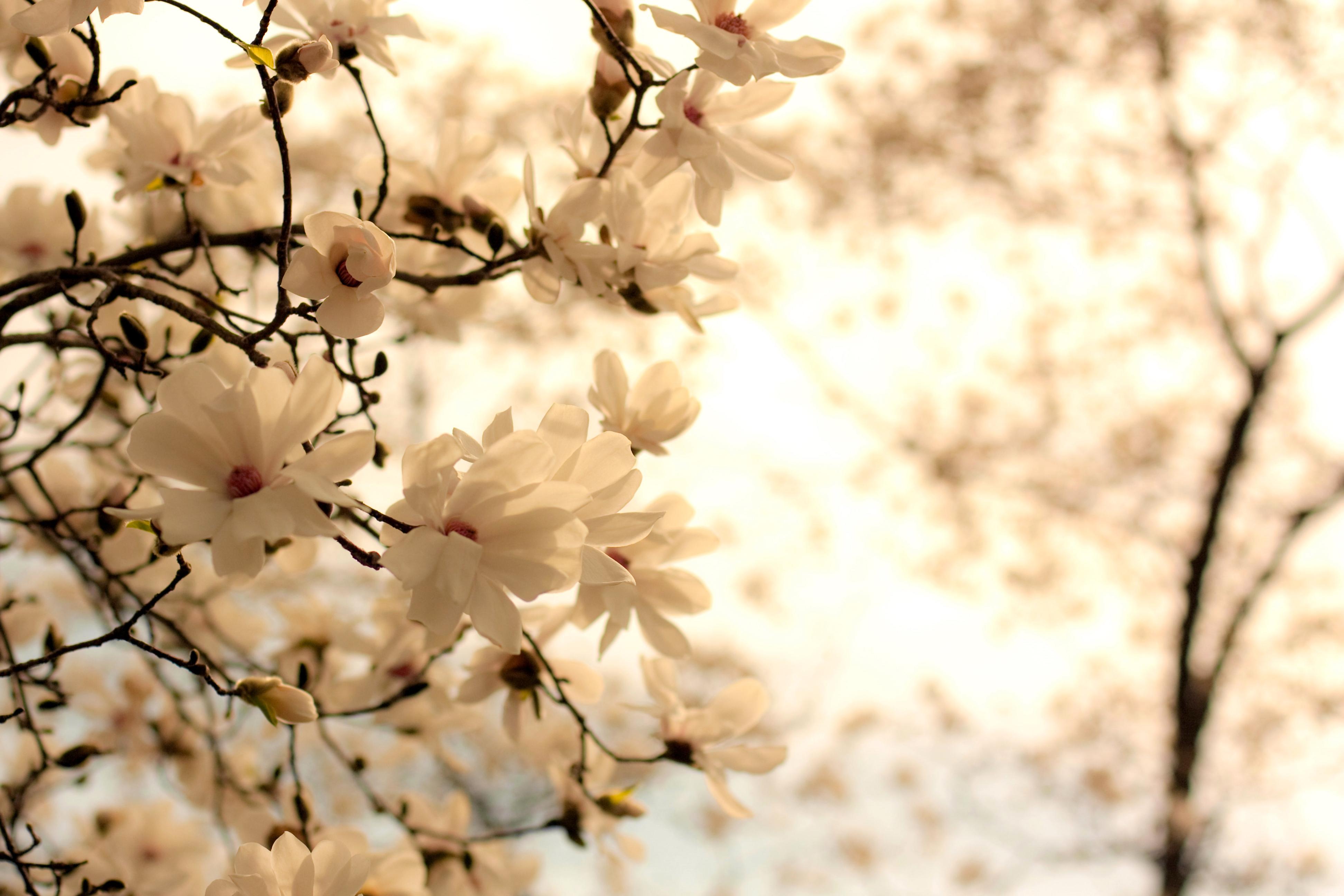 нежные цветочки на ветке  № 1333954  скачать