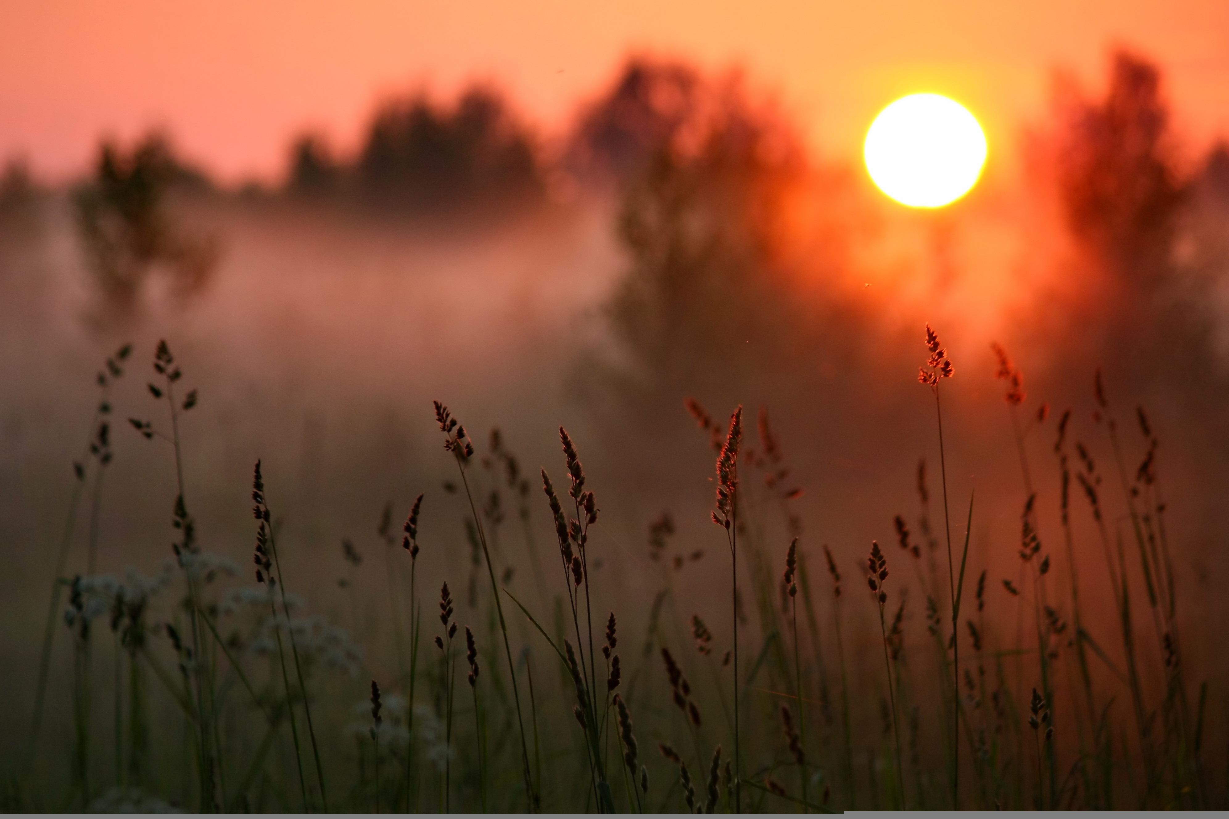 Восход солнца на окраине леса  № 1409532  скачать