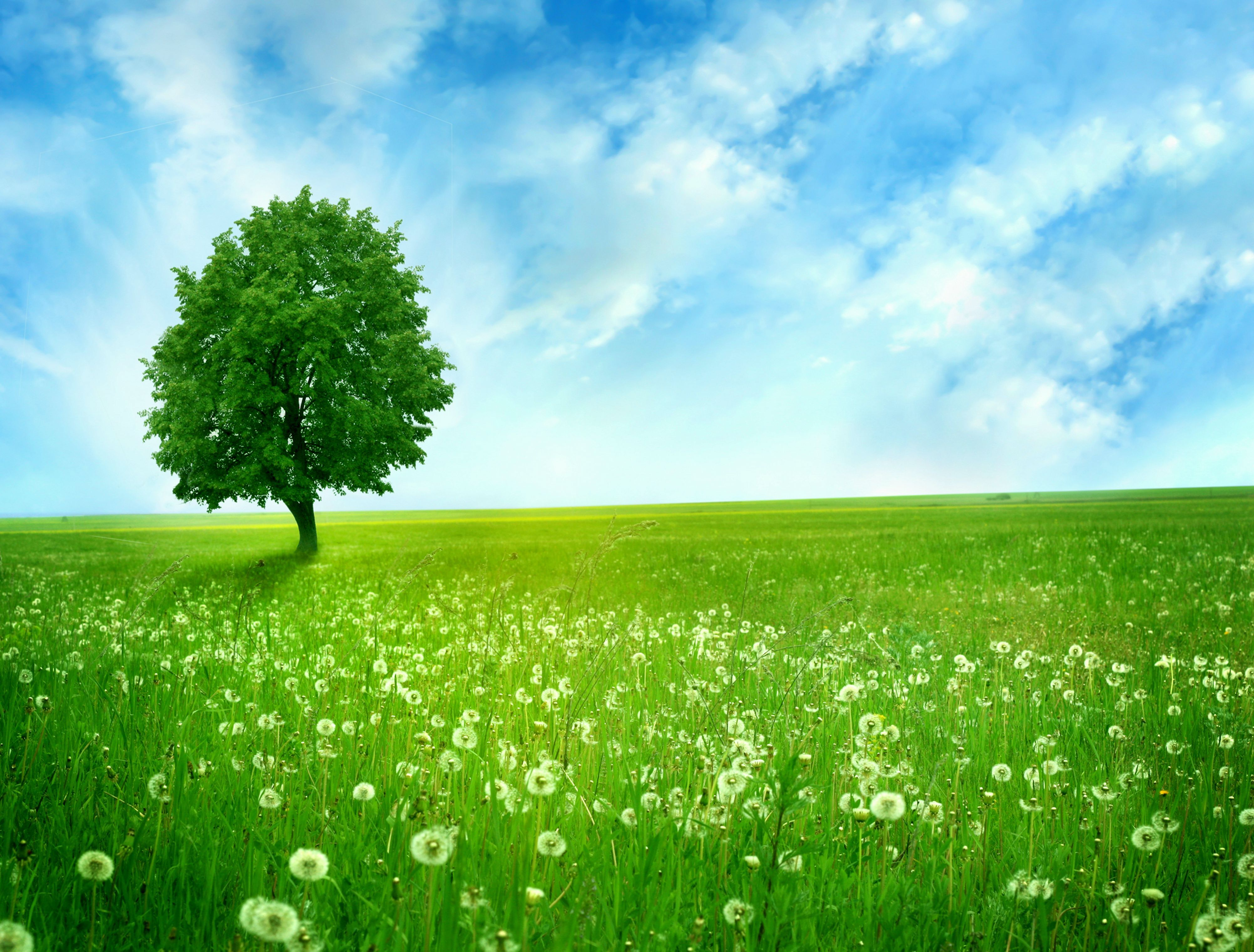 природа поле трава зеленая  № 610581  скачать