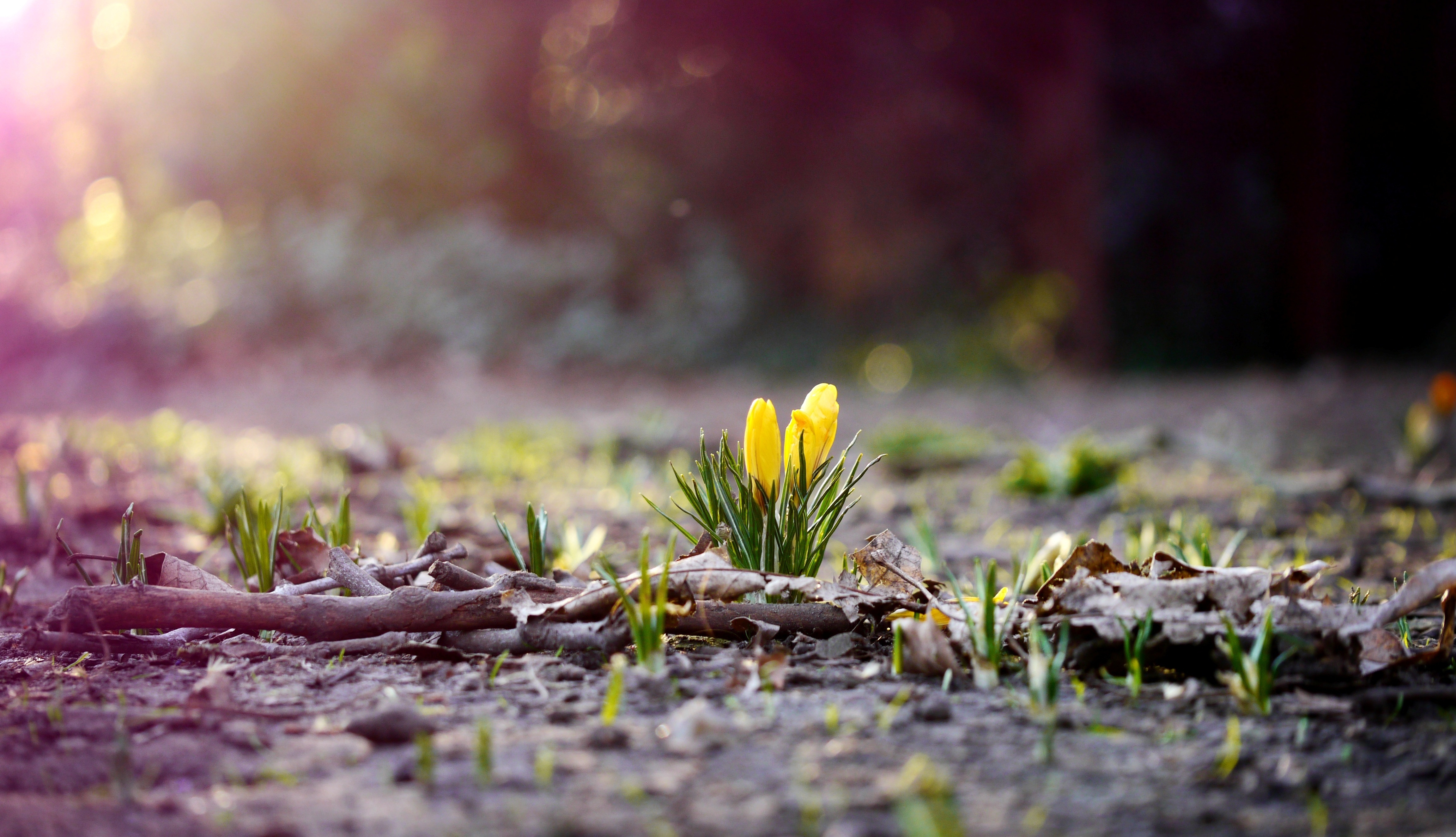 early spring images - HD4608×2648