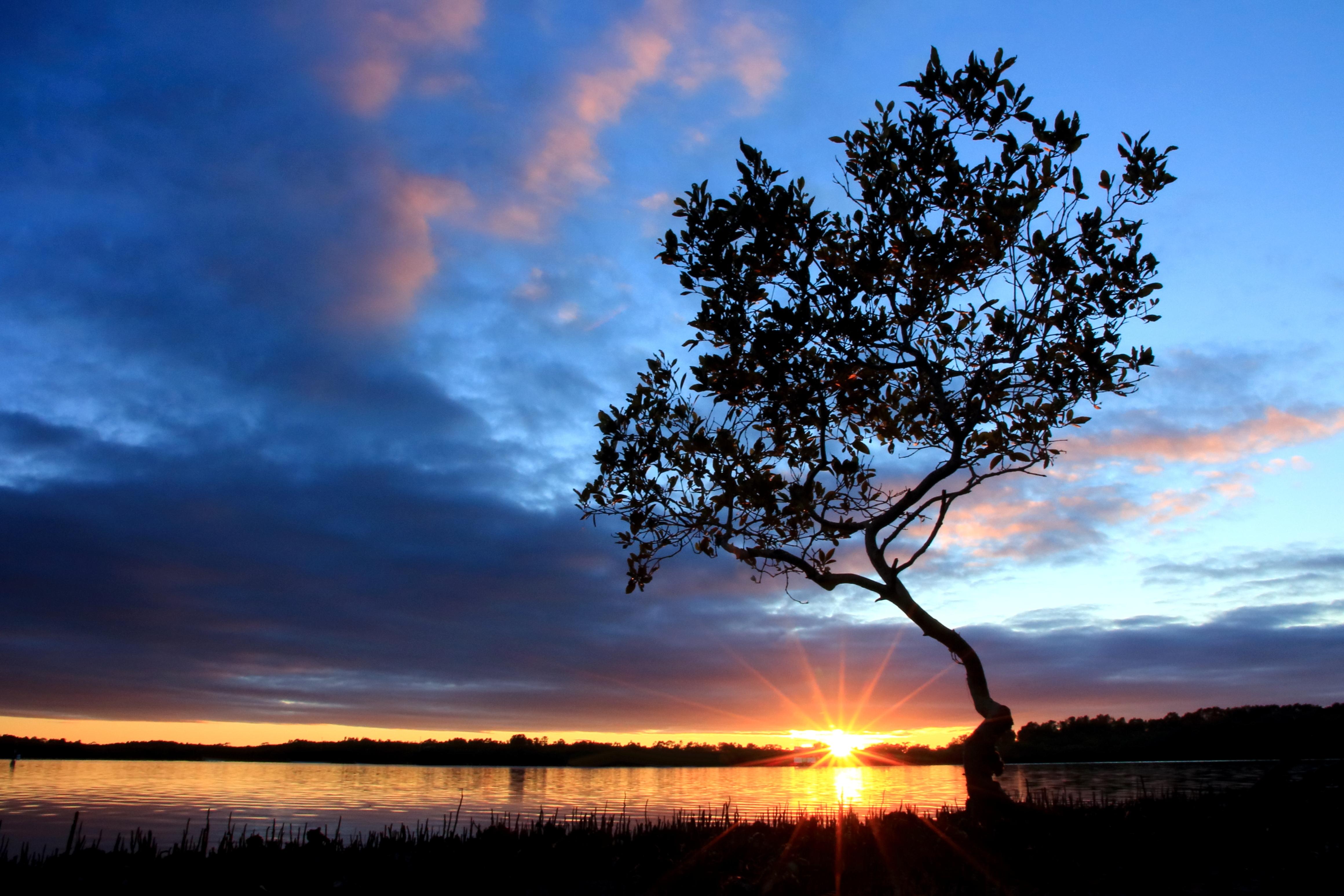деревья небо озеро  № 3165829 без смс
